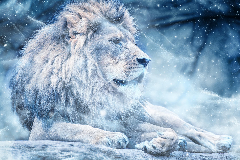 115798 скачать обои Животные, Большая Кошка, Снег, Лев, Царь Зверей - заставки и картинки бесплатно