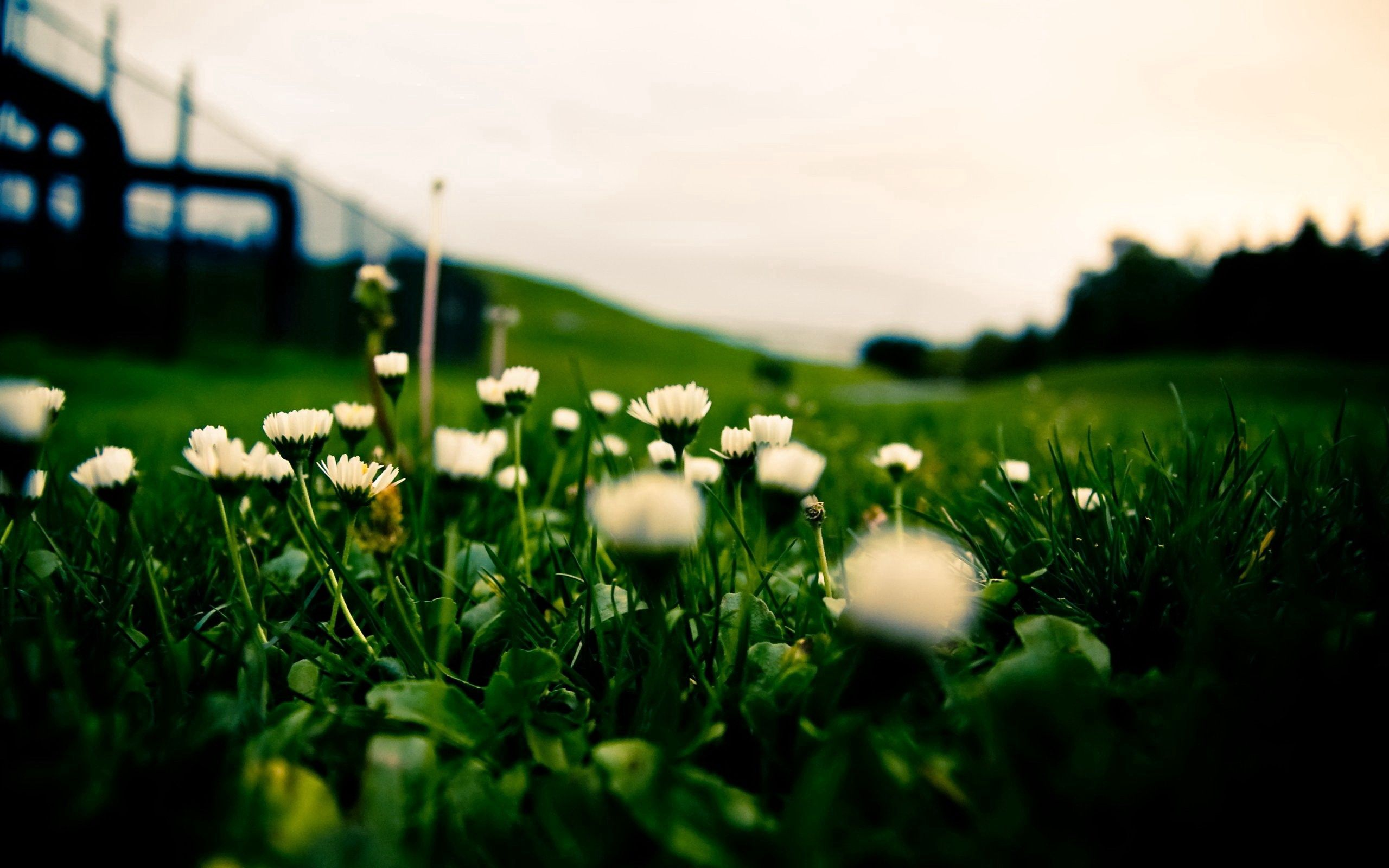 152327 download wallpaper Macro, Grass, Field, Blur, Smooth, Background, Macro Photography, Flowers screensavers and pictures for free