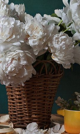 46941 baixar papel de parede Plantas, Flores - protetores de tela e imagens gratuitamente