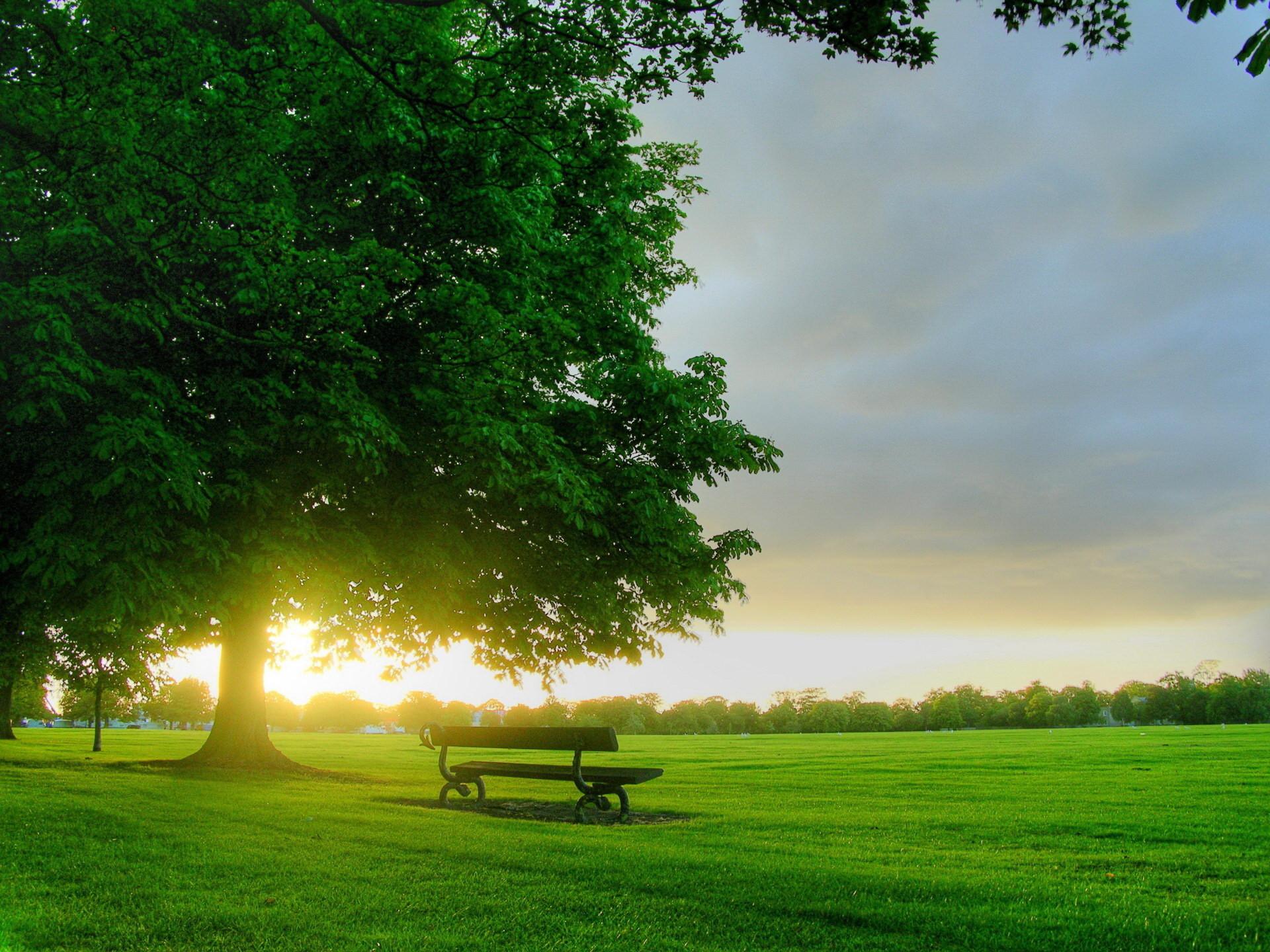 Скачать картинку Закат, Трава, Пейзаж, Деревья в телефон бесплатно.