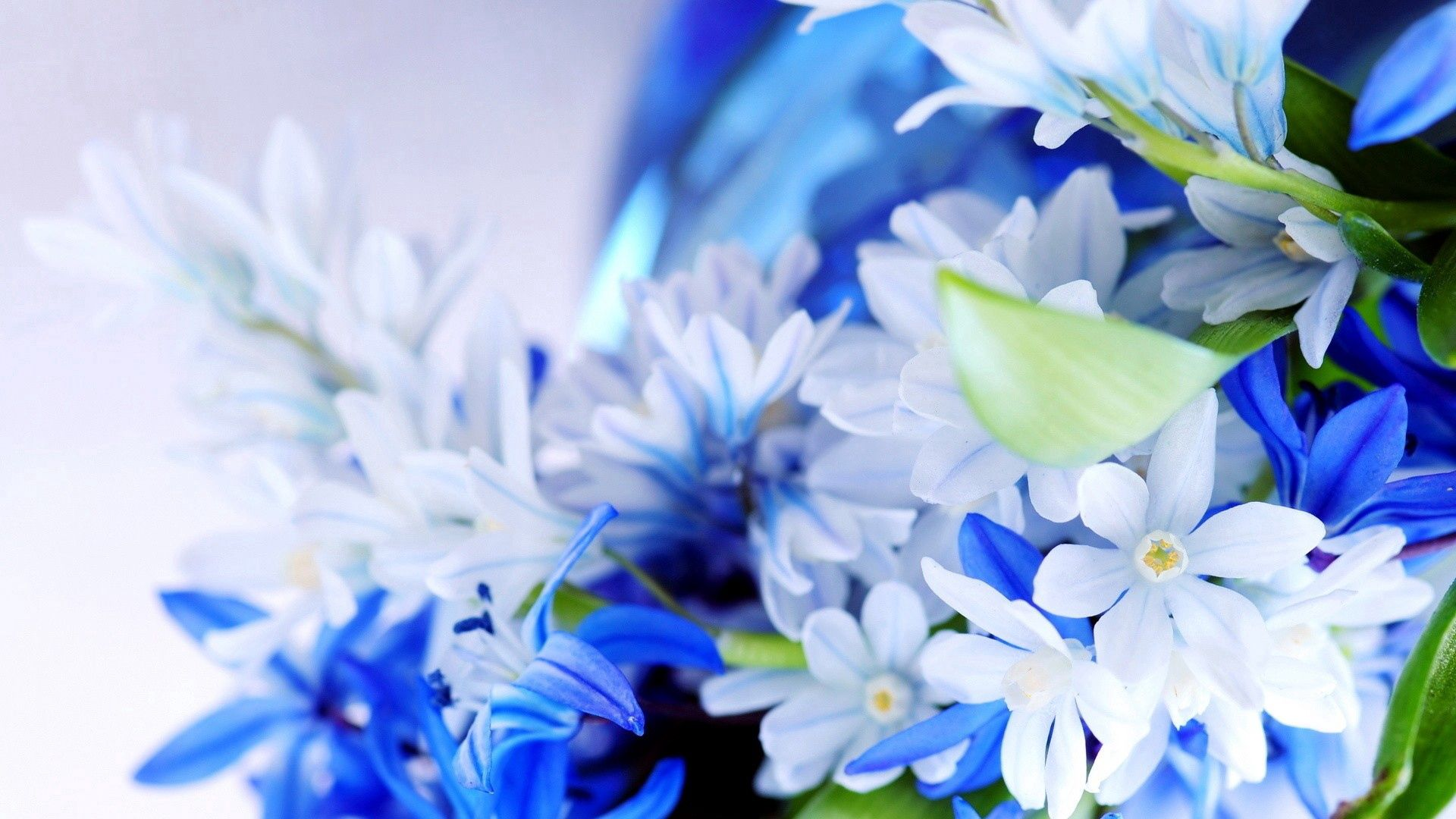 136054 Screensavers and Wallpapers Beautiful for phone. Download Flowers, Grass, Plant, Macro, Beautiful pictures for free