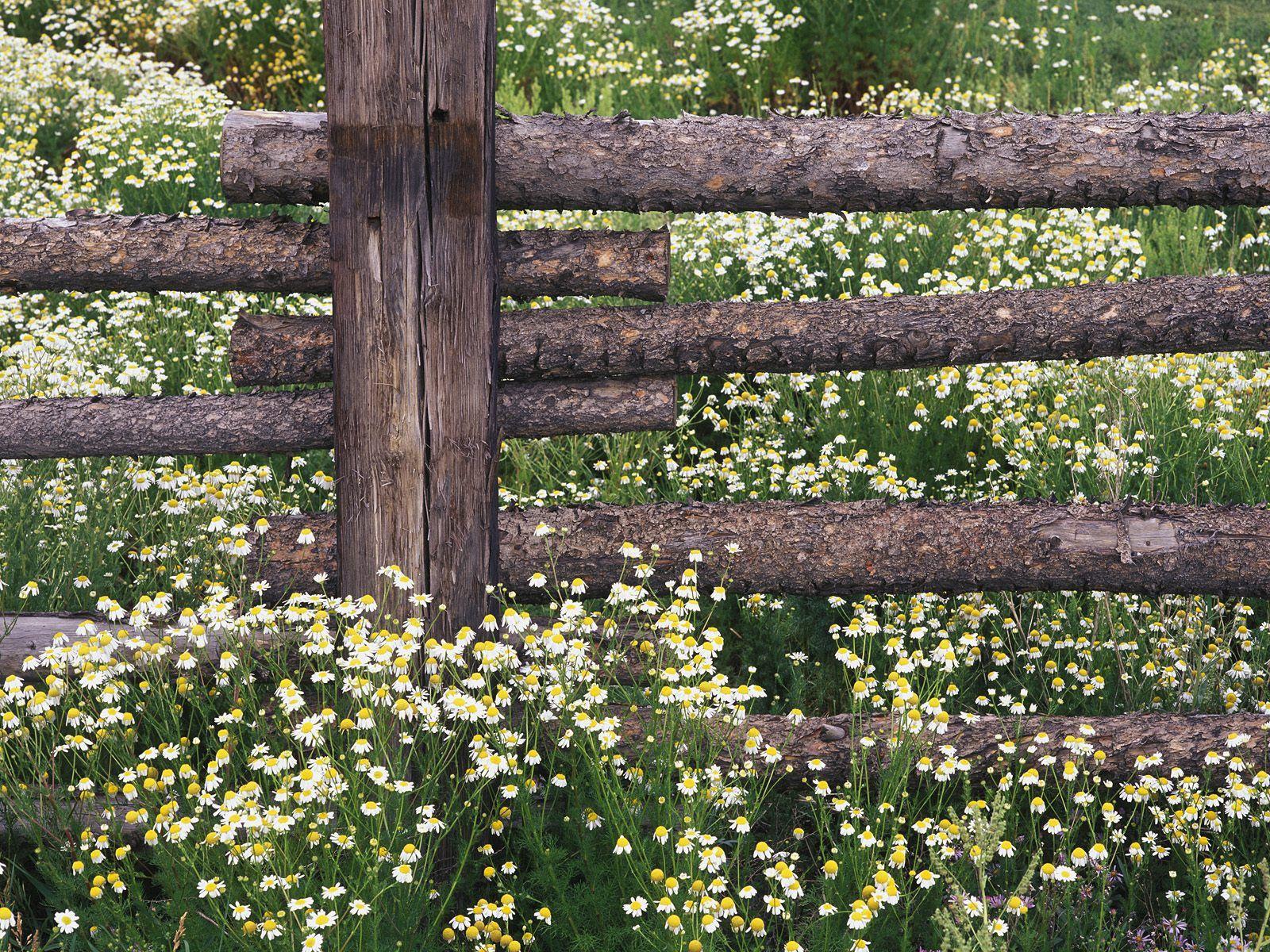 83462 скачать обои Природа, Ромашки, Поле, Бревна, Забор - заставки и картинки бесплатно