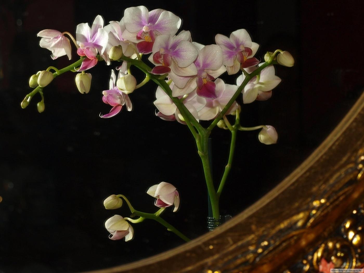 25610 скачать обои Растения, Цветы - заставки и картинки бесплатно