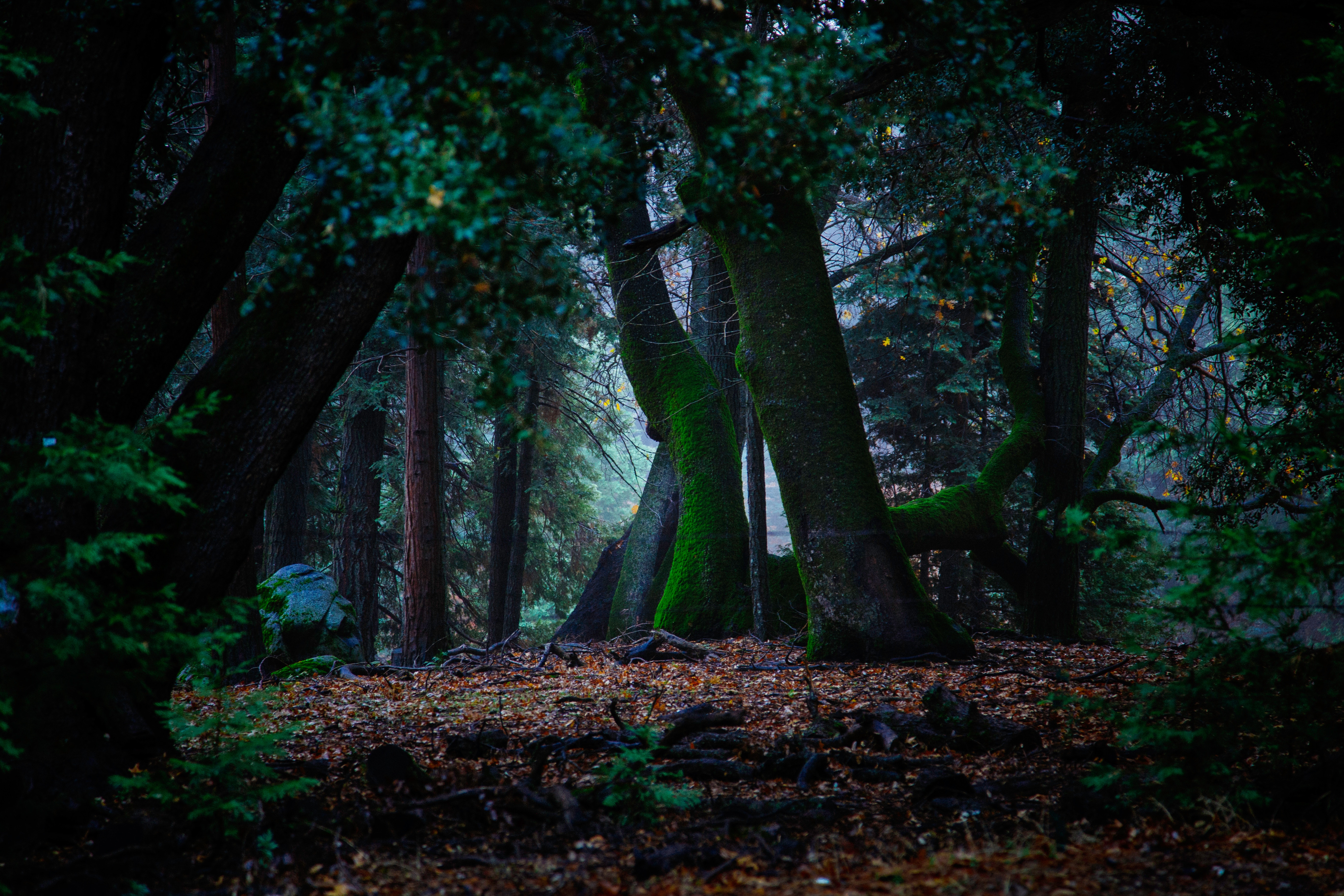 138432 download wallpaper Nature, Trees, Autumn, Moss, Foliage, Forest screensavers and pictures for free