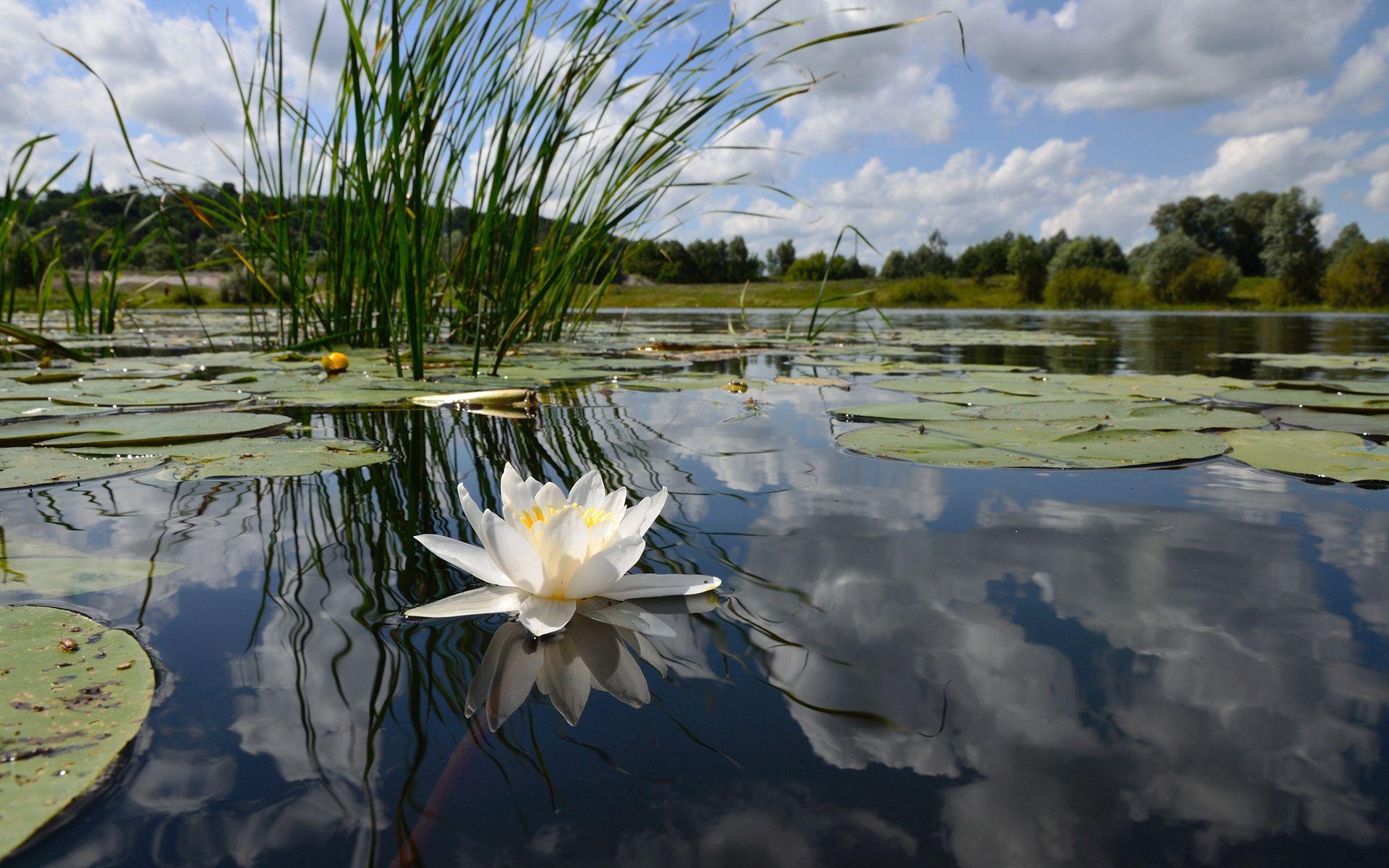 69776 скачать обои Природа, Цветок, Облака, Кувшинка, Озеро, Отражение, Лилия, Зеркало - заставки и картинки бесплатно
