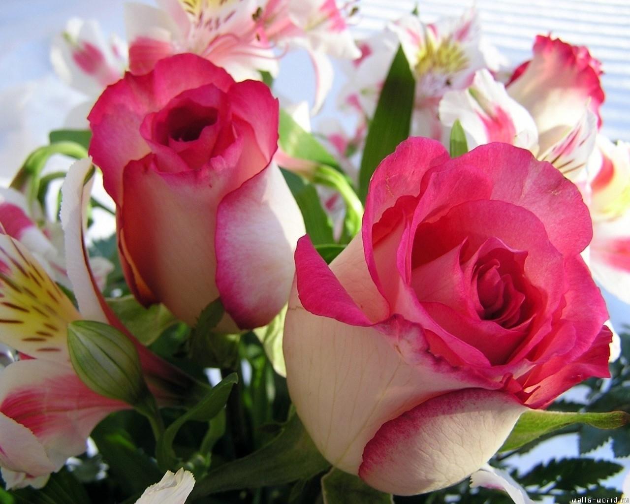 9145 скачать обои Растения, Цветы, Розы, Открытки, 8 Марта - заставки и картинки бесплатно