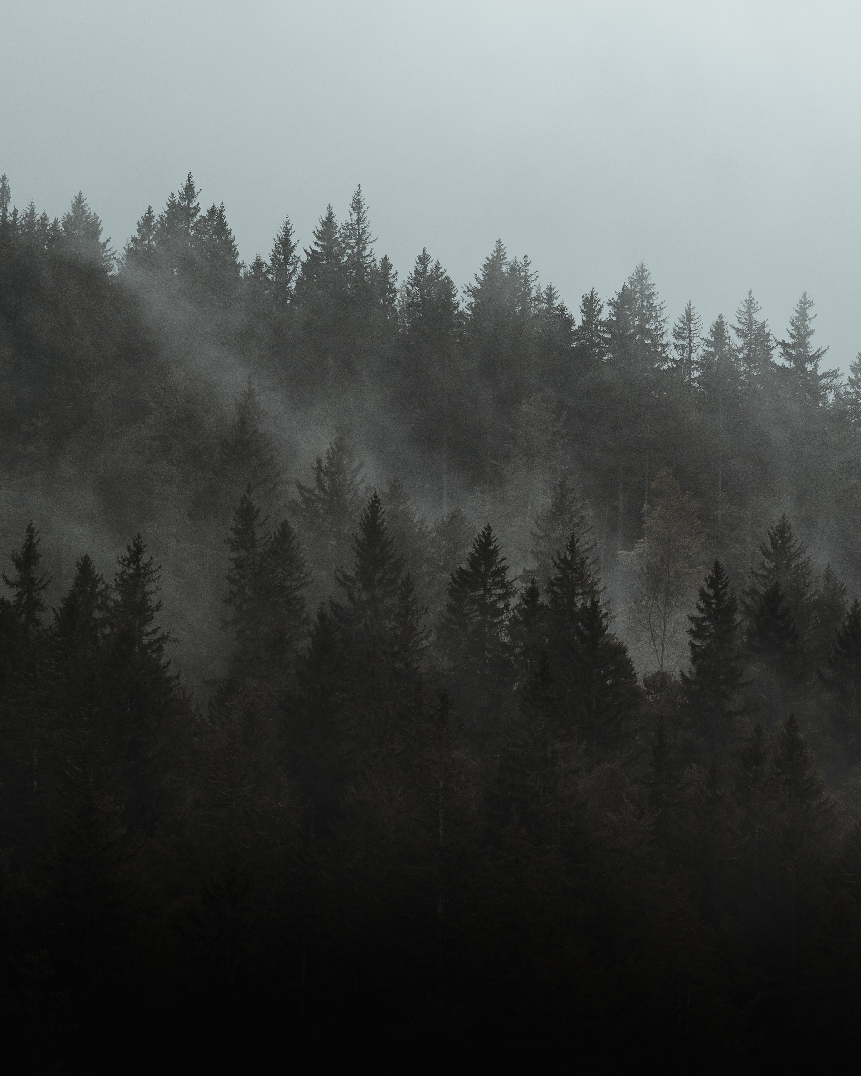 129561 免費下載壁紙 性质, 森林, 多雾路段, 雾, 树, 云, 云端, 松 屏保和圖片
