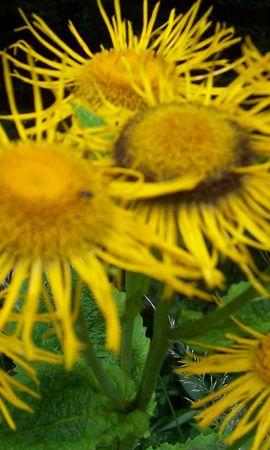 8392 скачать обои Растения, Цветы - заставки и картинки бесплатно