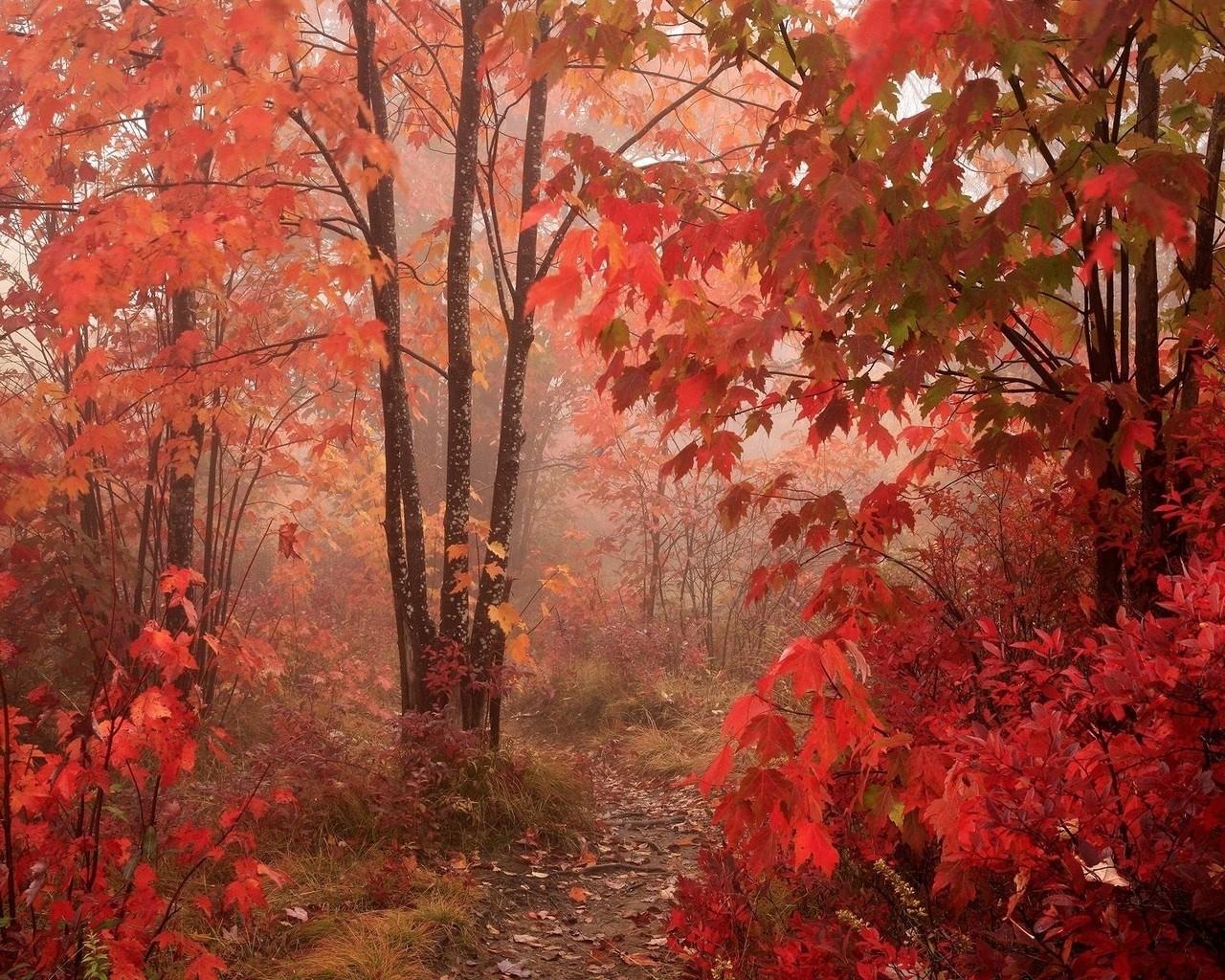 5418 скачать обои Насекомые, Пейзаж, Осень - заставки и картинки бесплатно