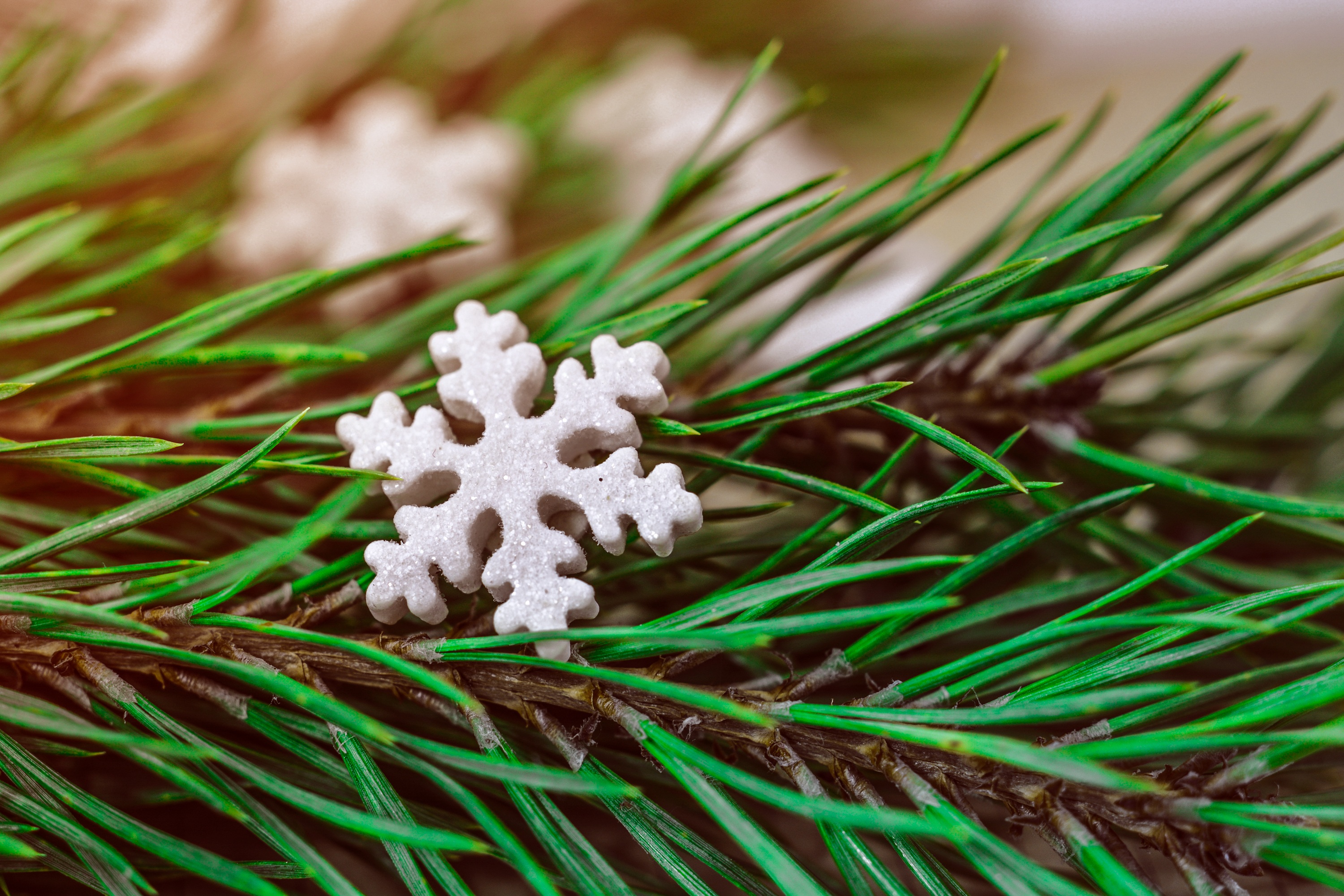 109348 Screensavers and Wallpapers Spruce for phone. Download Holidays, Christmas, Spruce, Fir, Snowflake pictures for free