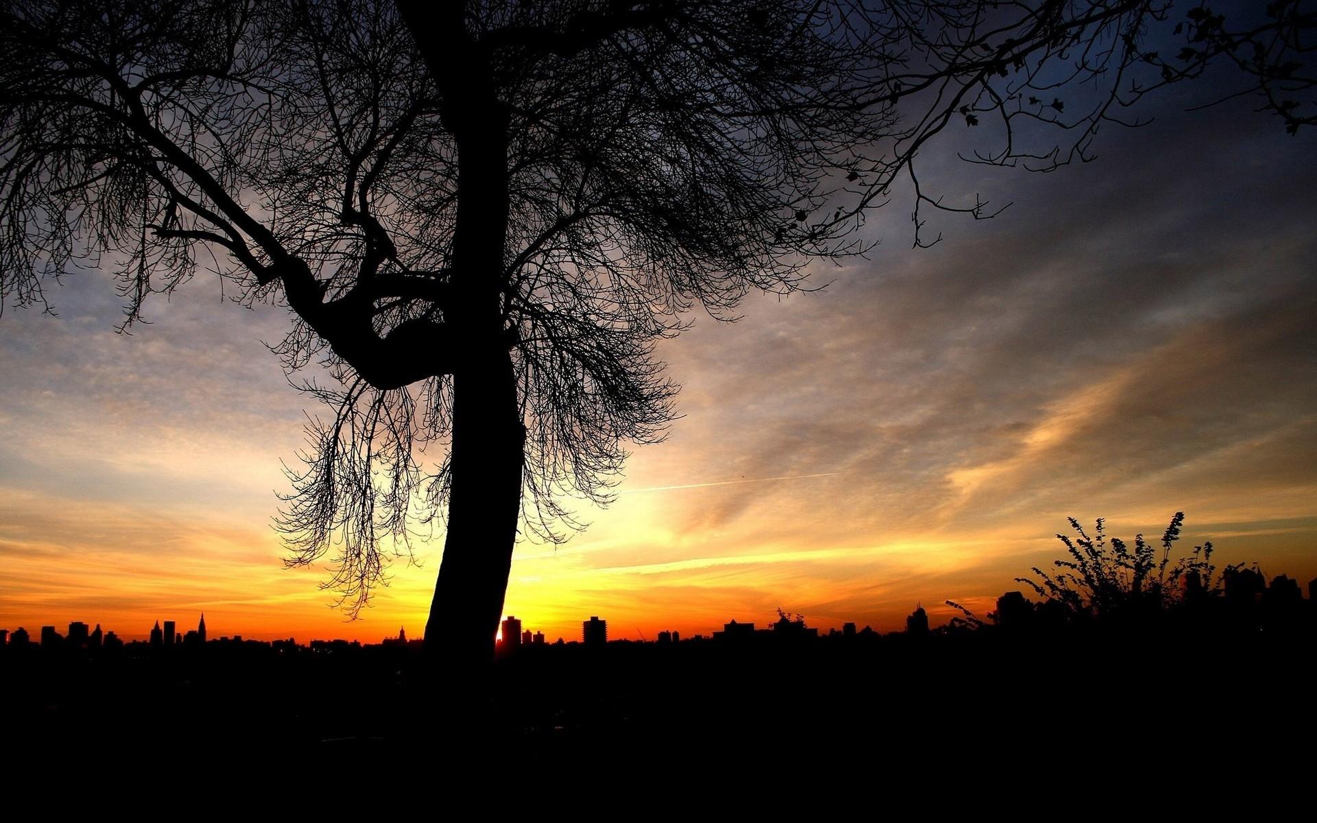4826 скачать обои Пейзаж, Деревья, Закат - заставки и картинки бесплатно