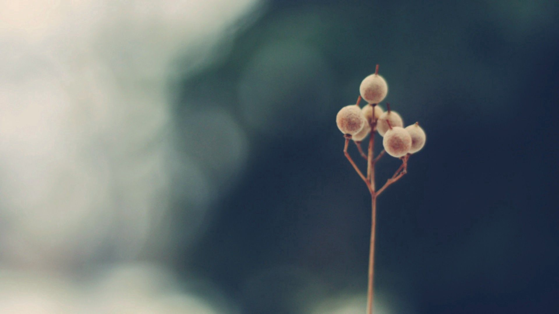 155315 скачать обои Макро, Растение, Стебель, Сухой, Фон - заставки и картинки бесплатно