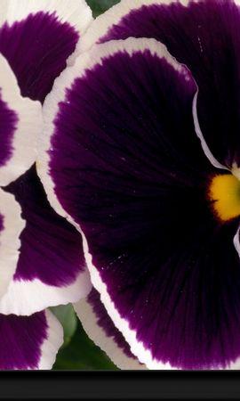 8777 скачать обои Растения, Цветы - заставки и картинки бесплатно