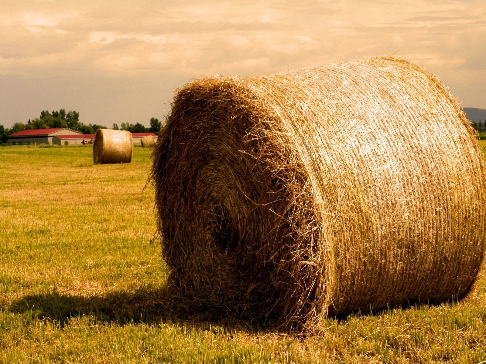 105501 Screensavers and Wallpapers Agriculture for phone. Download Nature, Summer, Gold, Golden, Hay, Agriculture, Bales pictures for free