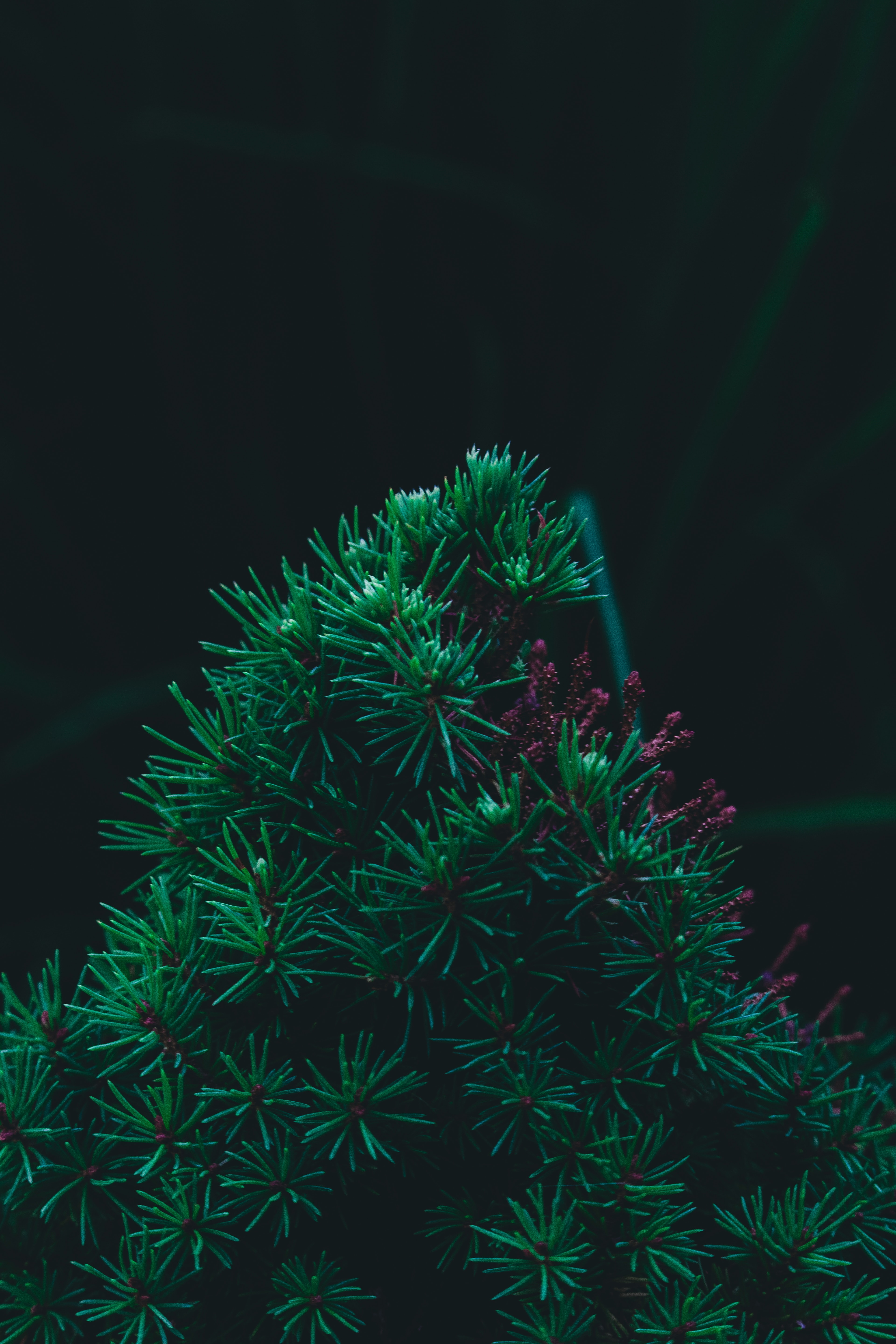 142813 download wallpaper Pine, Macro, Branch, Needles, Barbed, Spiny screensavers and pictures for free