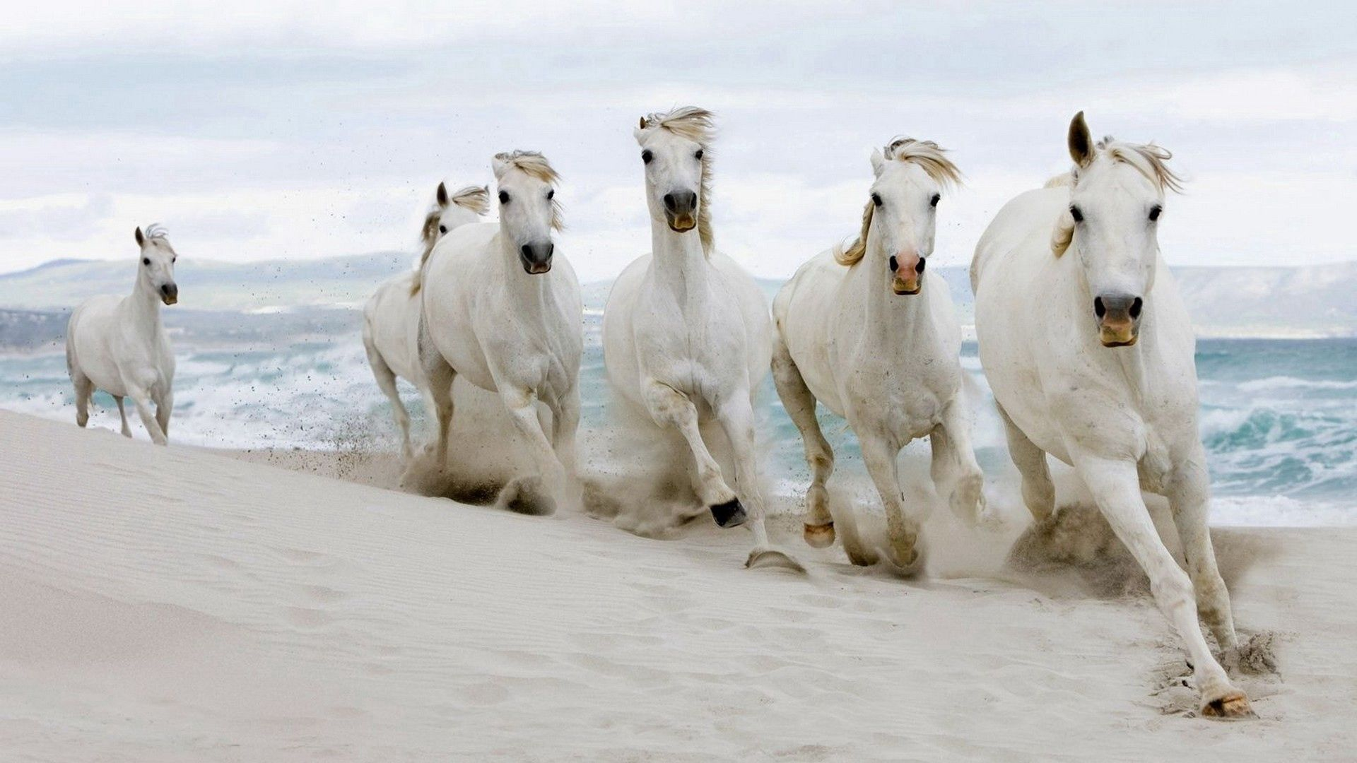 59812 download wallpaper Animals, Horses, Sea, Sand, Herd, Run Away, Run screensavers and pictures for free