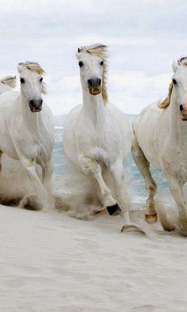 59812 baixar papel de parede Animais, Cavalos, Rebanho, Manada, Fugir, Correr, Areia, Mar - protetores de tela e imagens gratuitamente