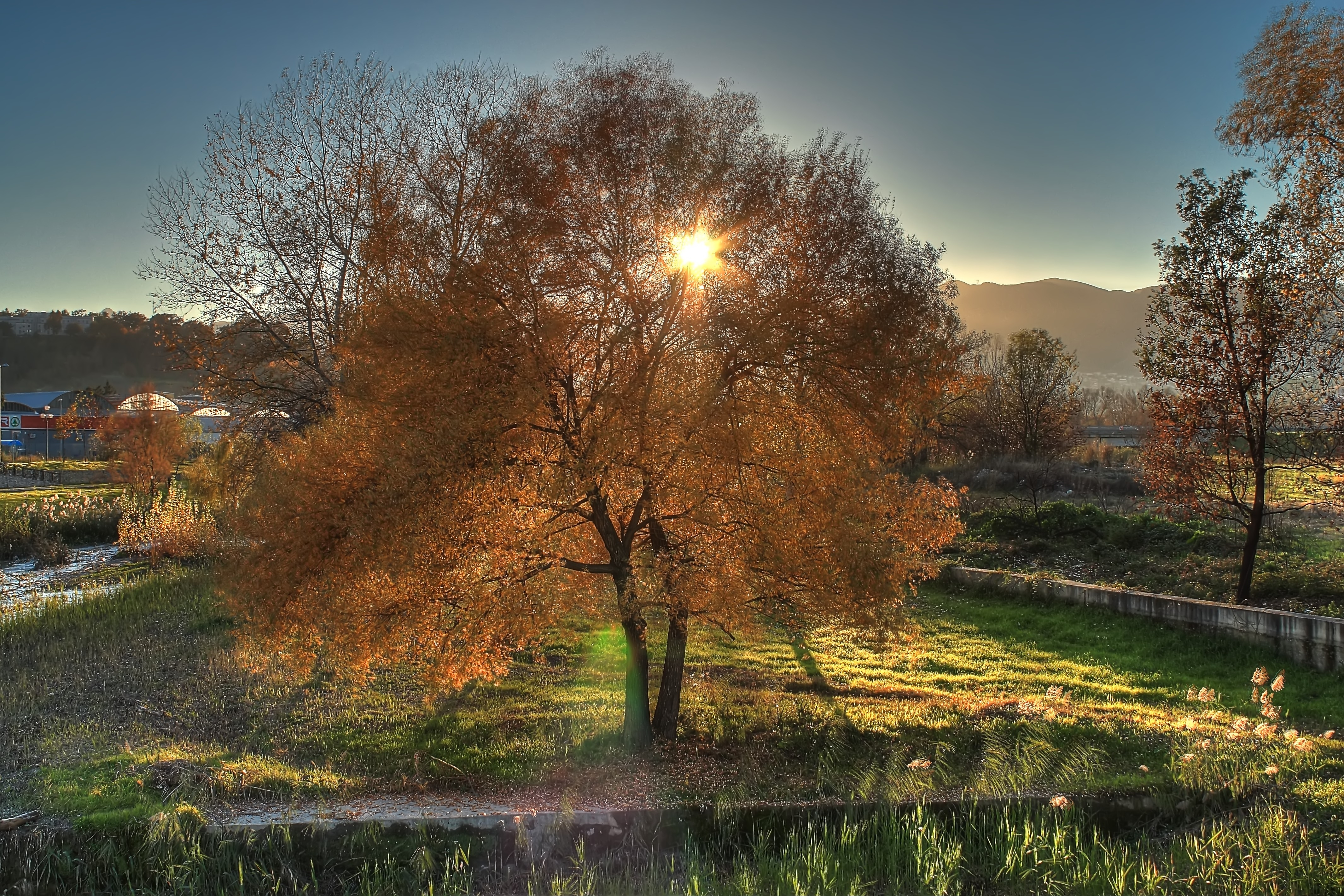 142091 download wallpaper Trees, Landscape, Nature, Autumn screensavers and pictures for free