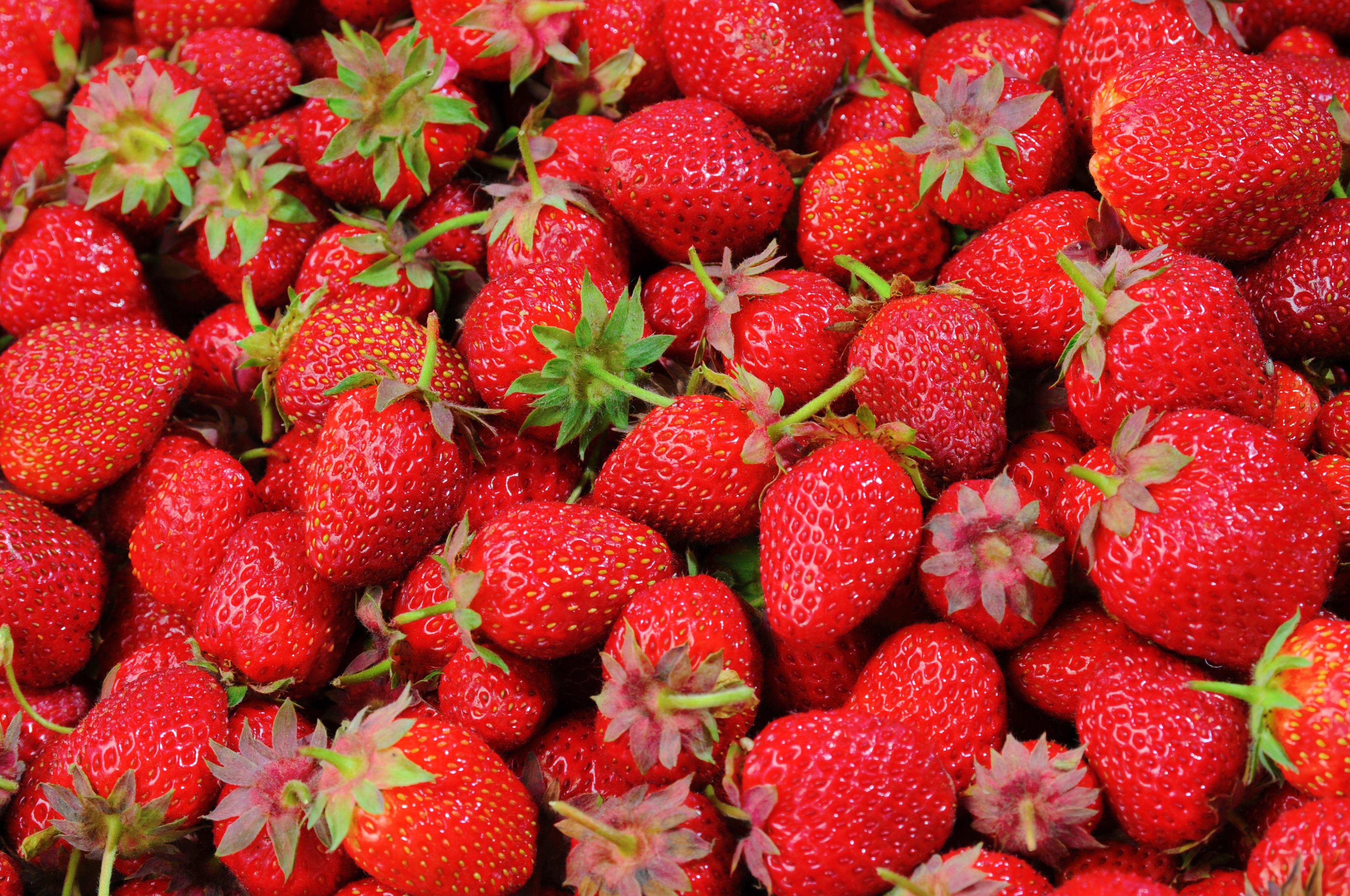 91851 Hintergrundbild herunterladen Erdbeere, Lebensmittel, Berries, Reif - Bildschirmschoner und Bilder kostenlos