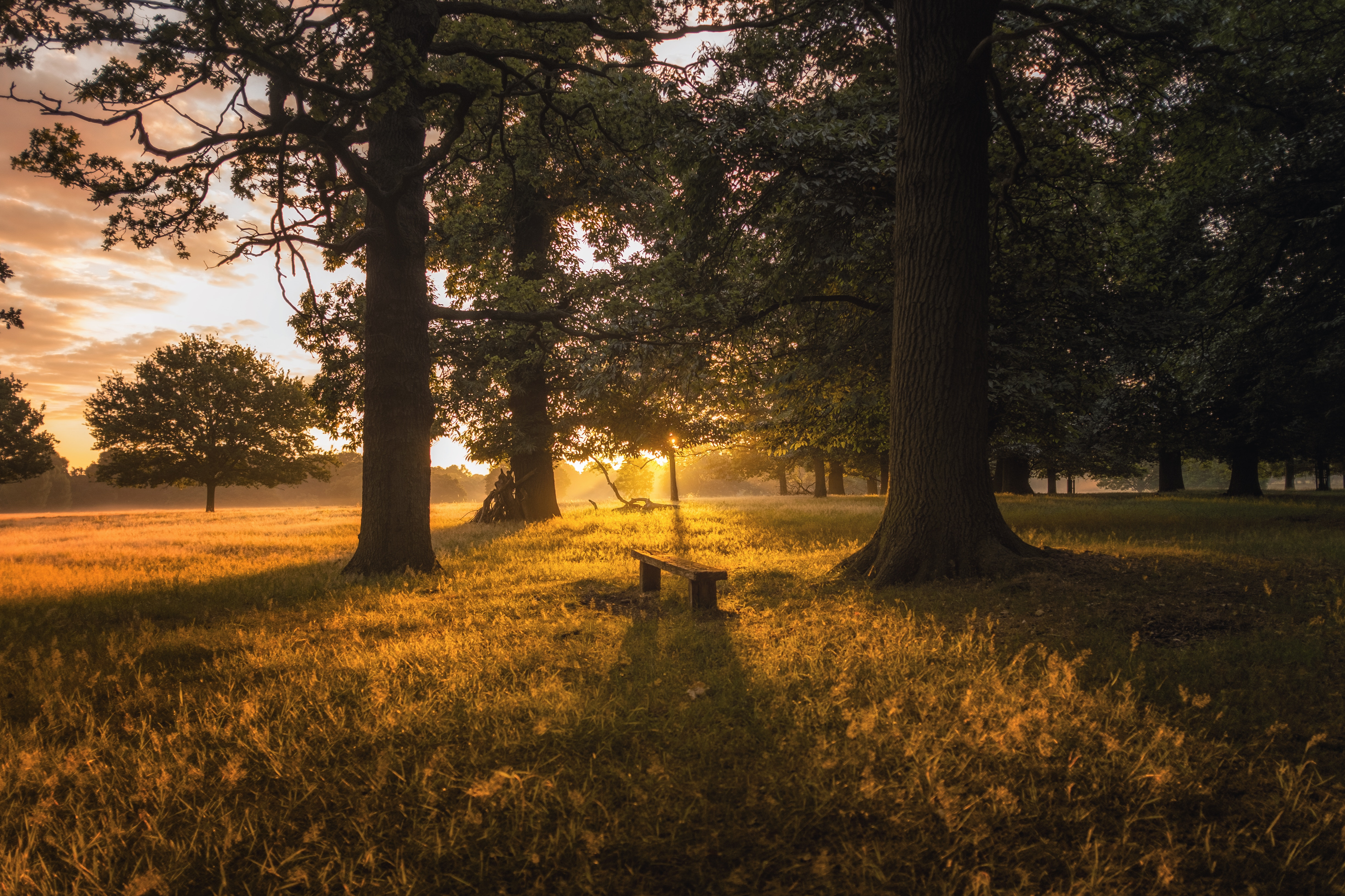 53177 Screensavers and Wallpapers Bench for phone. Download Bench, Nature, Trees, Grass, Dawn, Forest pictures for free