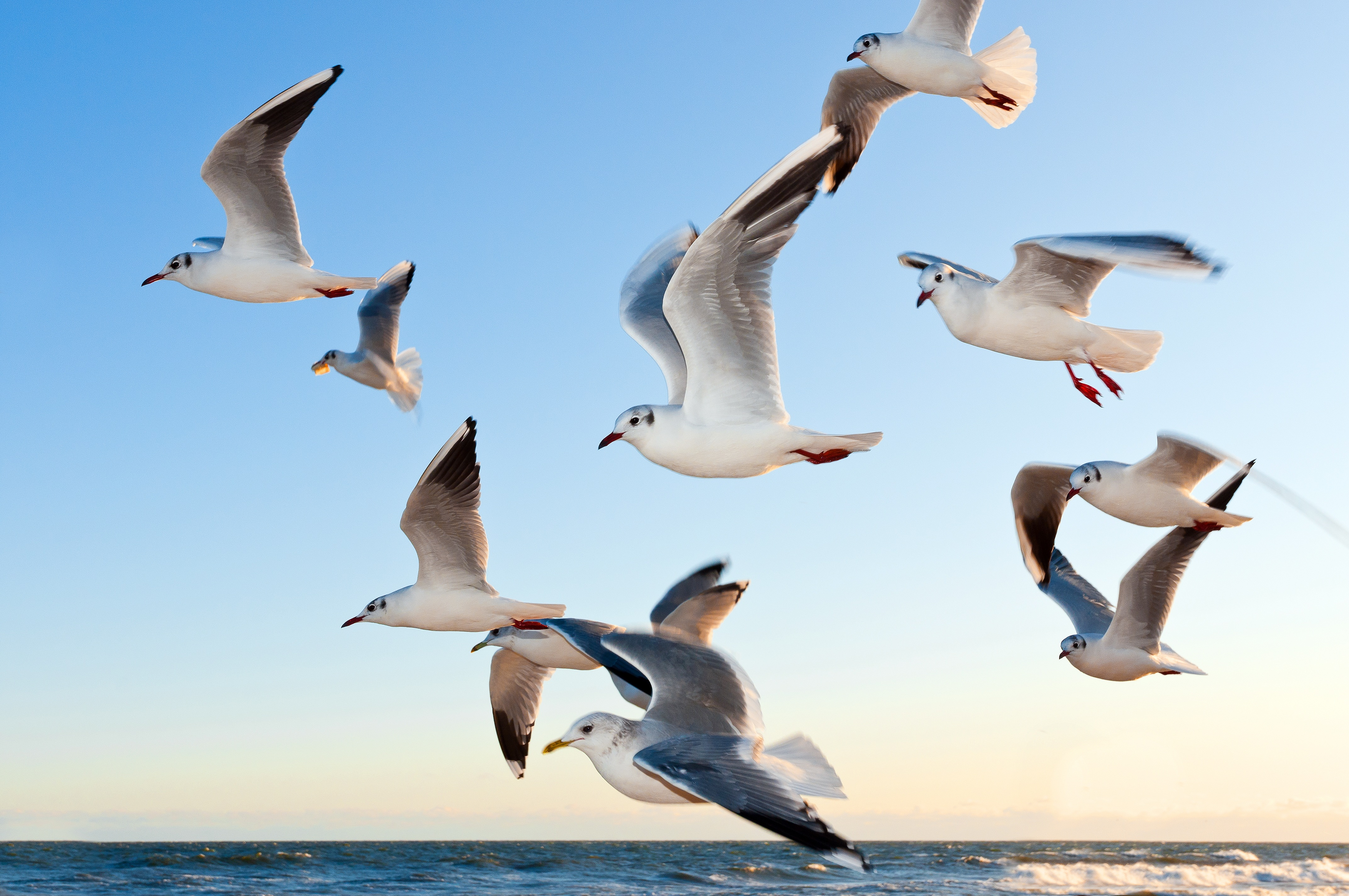 149309 download wallpaper Animals, Birds, Sea, Seagulls, Flight screensavers and pictures for free