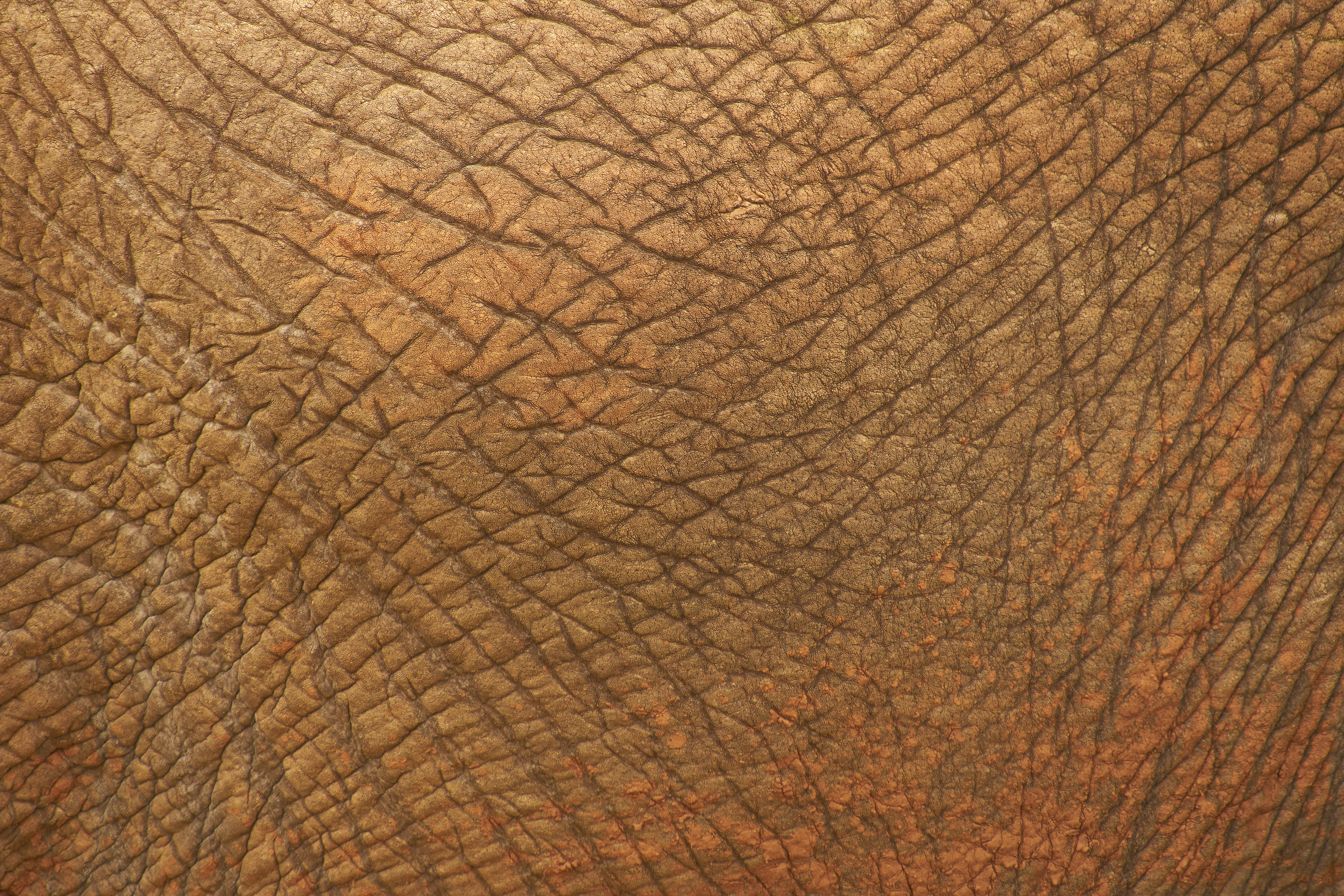 102908 download wallpaper Textures, Texture, Leather, Skin, Folds, Pleating, Animal screensavers and pictures for free