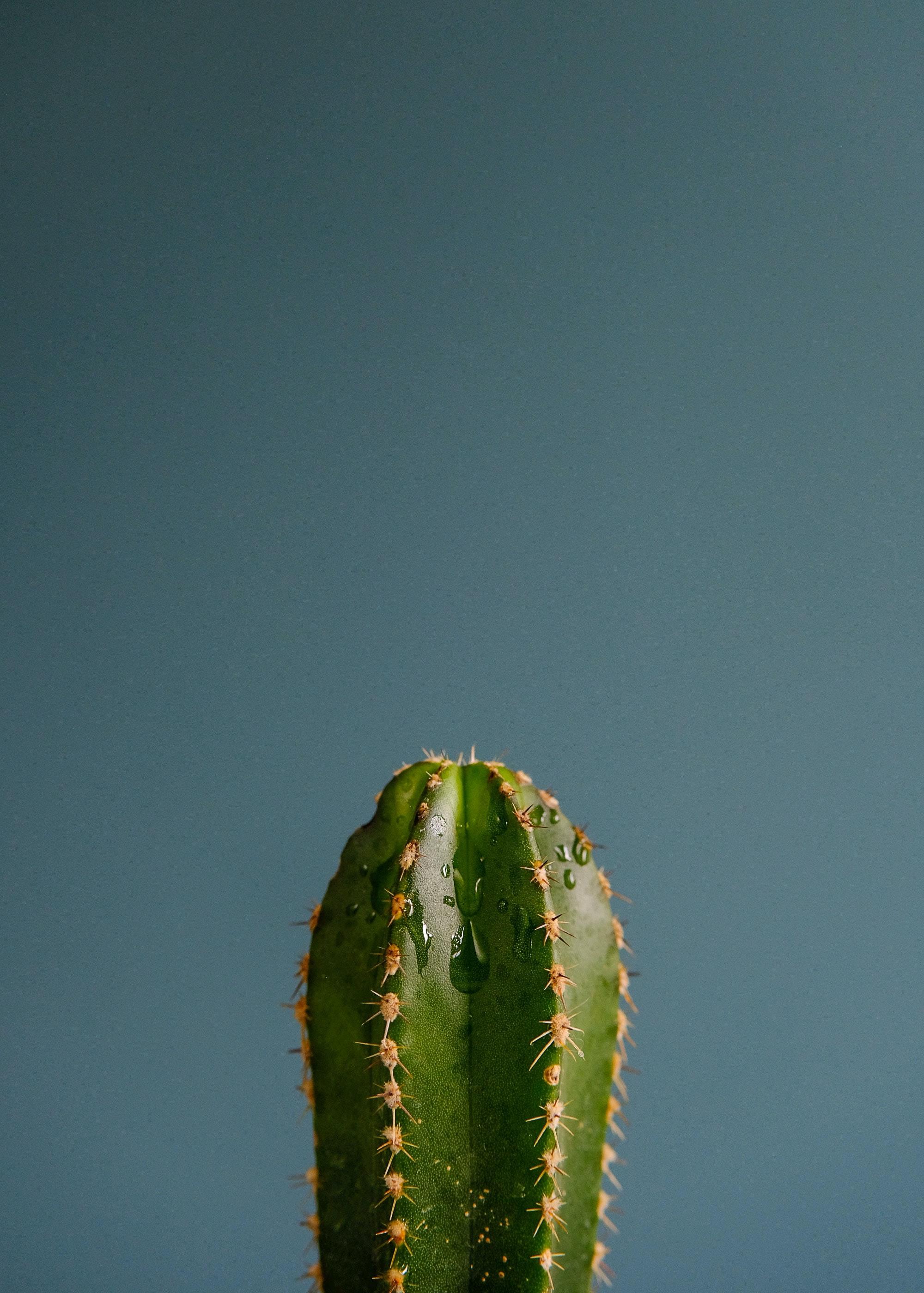 109390 descargar fondo de pantalla Miscelánea, Misceláneo, Cactus, Cacto, Espinas, Planta, Drops: protectores de pantalla e imágenes gratis