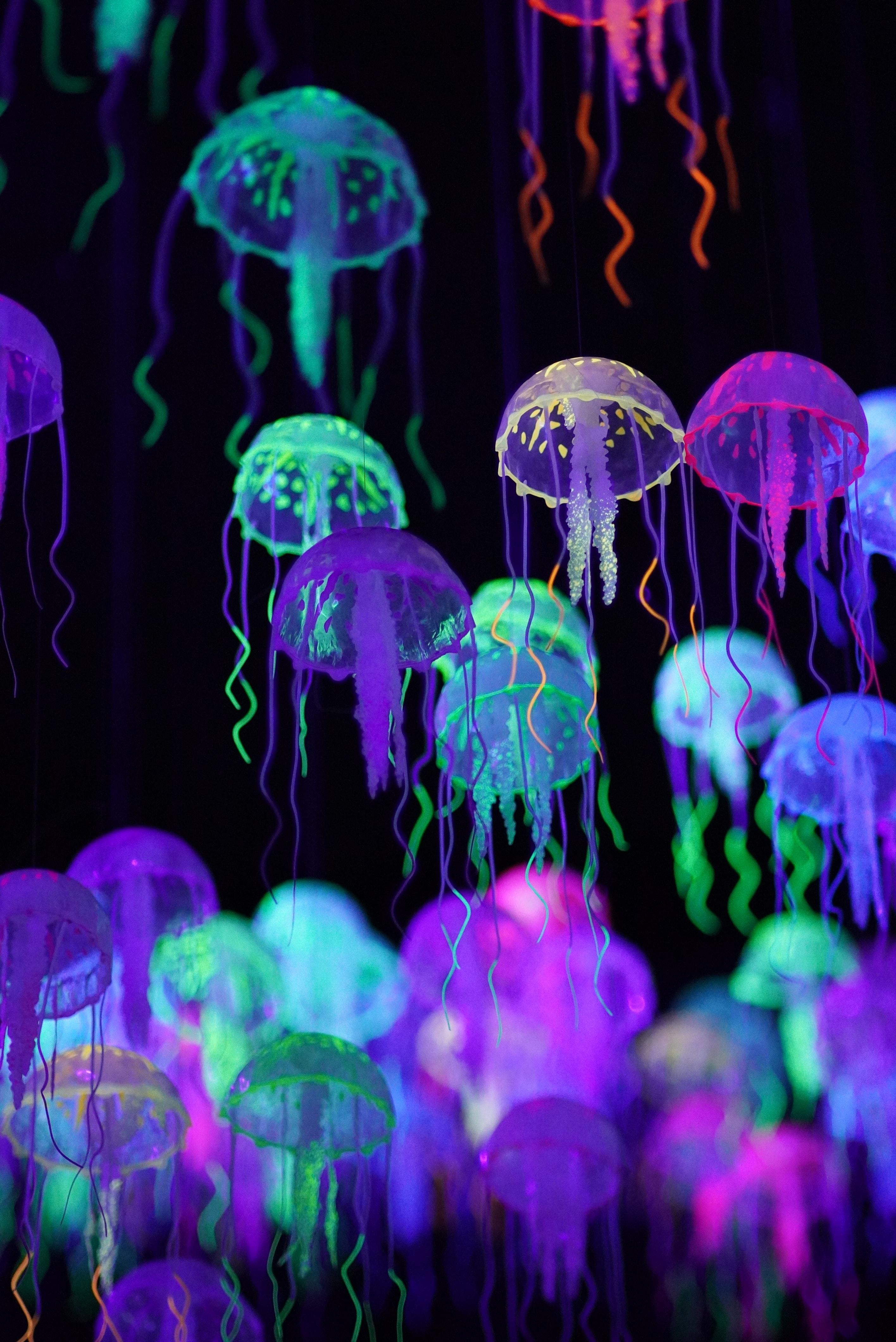 128945 скачать обои Разноцветный, Животные, Медузы, Свечение, Люминесценция - заставки и картинки бесплатно
