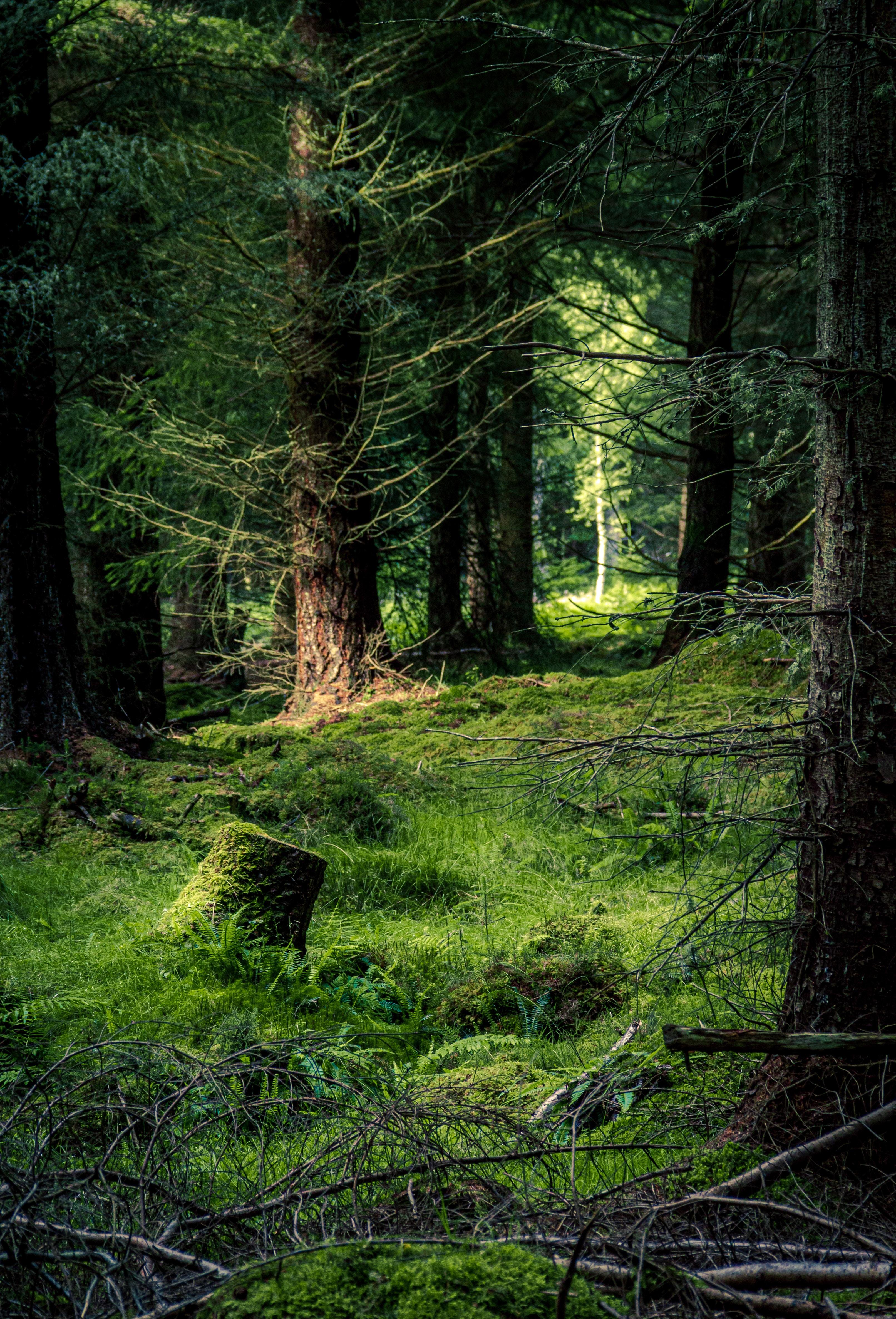 85899 скачать обои Лес, Деревья, Трава, Природа, Сосны - заставки и картинки бесплатно