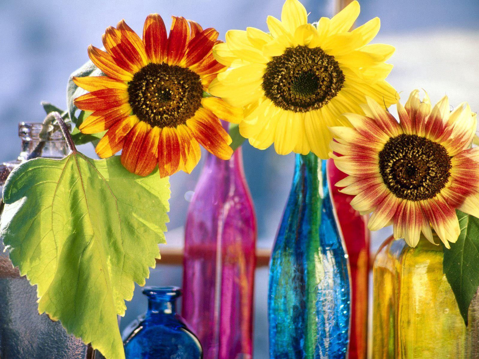 123356 скачать обои Цветы, Листок, Яркие, Бутылки, Свет, Подсолнухи - заставки и картинки бесплатно