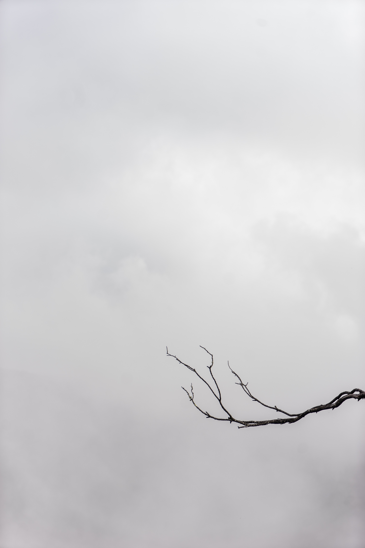 55716 免費下載壁紙 极简主义, 分支, 体重, 星期四, 天空 屏保和圖片