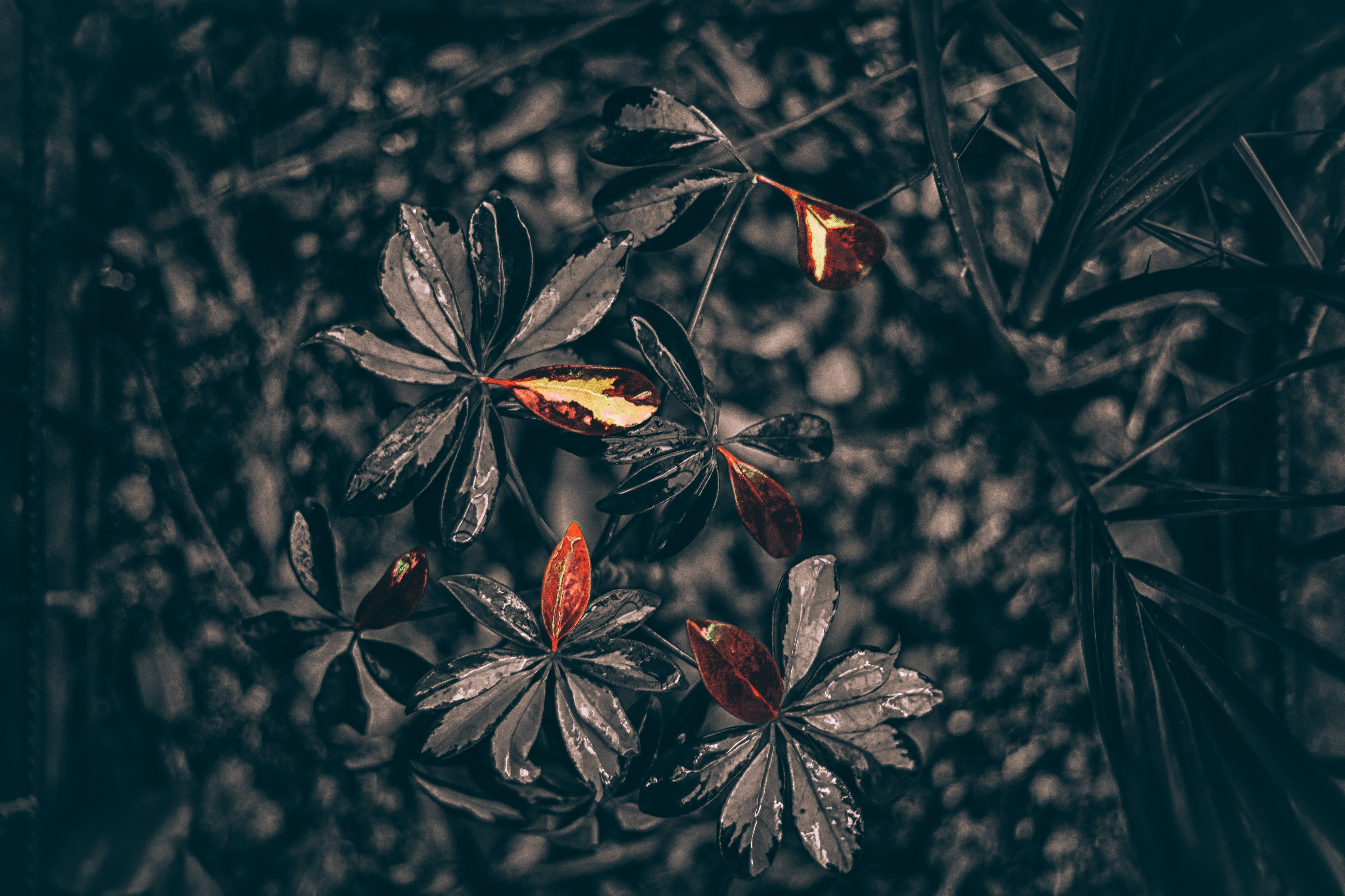 137472 download wallpaper Leaves, Drops, Plant, Macro screensavers and pictures for free