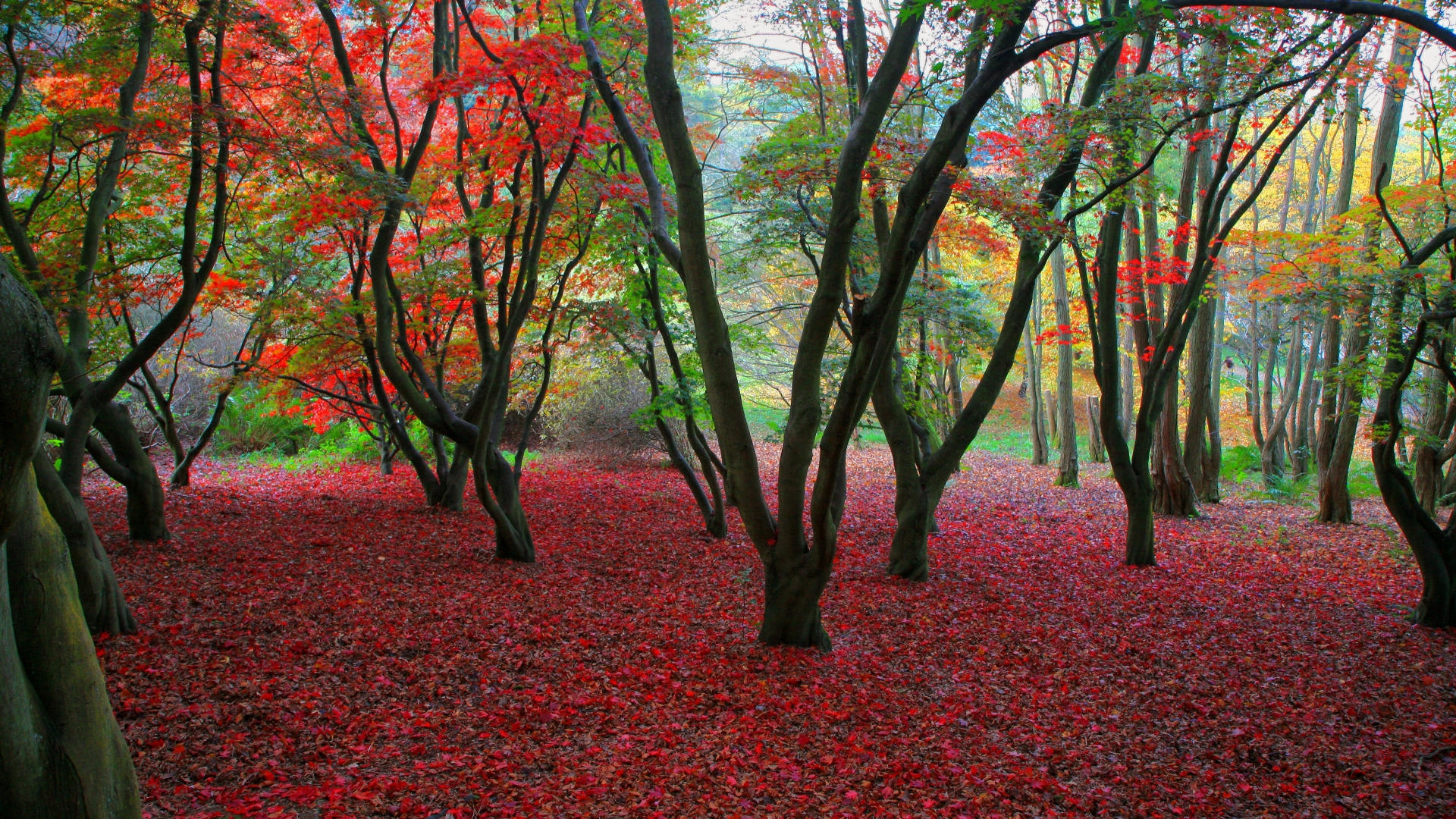 32013 download wallpaper Landscape, Trees, Autumn screensavers and pictures for free