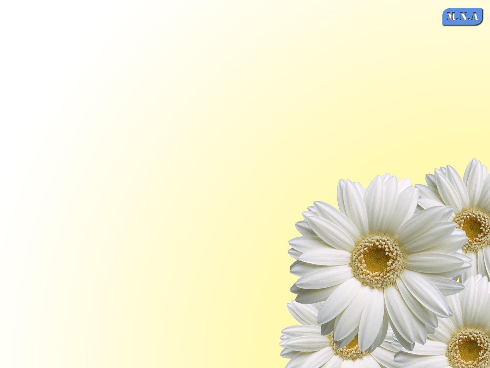 10498 descargar fondo de pantalla Plantas, Flores: protectores de pantalla e imágenes gratis