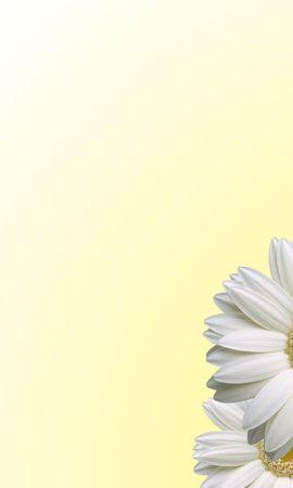 10498 скачать обои Растения, Цветы - заставки и картинки бесплатно