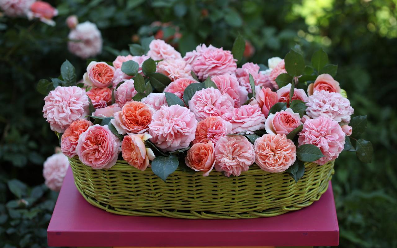 19099 télécharger le fond d'écran Fêtes, Plantes, Fleurs, Roses, Bouquets - économiseurs d'écran et images gratuitement