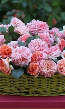 19099 baixar papel de parede Férias, Plantas, Flores, Rosas, Bouquets - protetores de tela e imagens gratuitamente