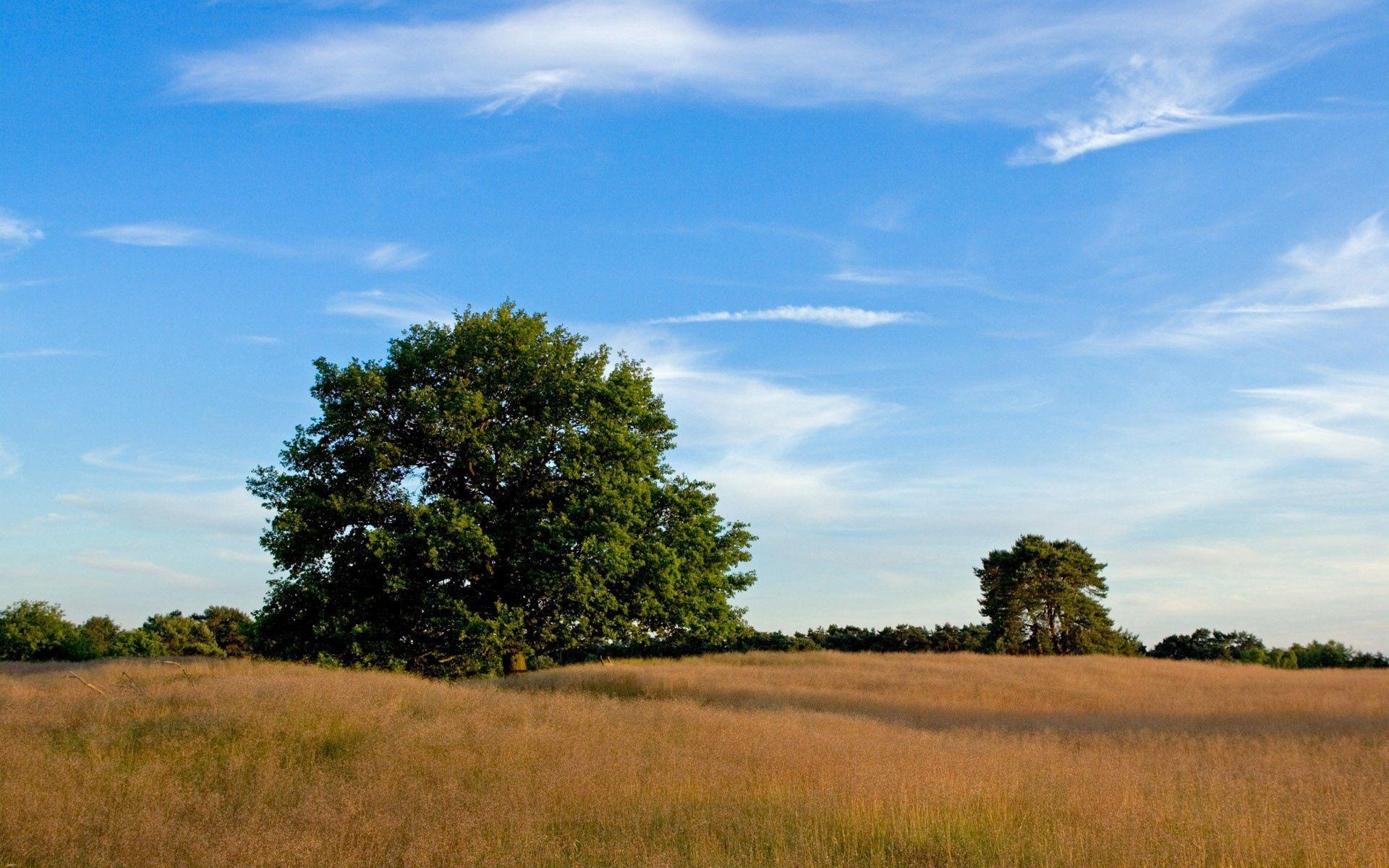 136044 descargar fondo de pantalla Naturaleza, Árboles, Campo, Prado, Hierba, Espacios Abiertos, Extensión: protectores de pantalla e imágenes gratis
