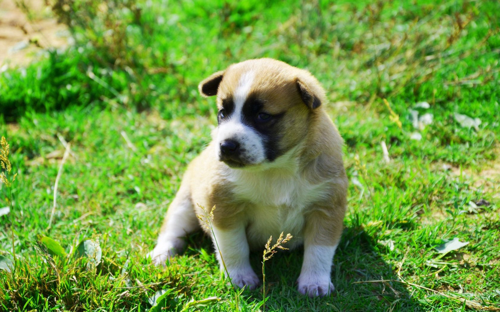 114418 download wallpaper Animals, Dog, Puppy, Grass, Sit, Shadow screensavers and pictures for free