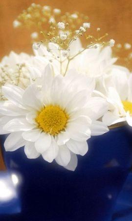 42172 télécharger le fond d'écran Plantes, Fleurs, Camomille - économiseurs d'écran et images gratuitement
