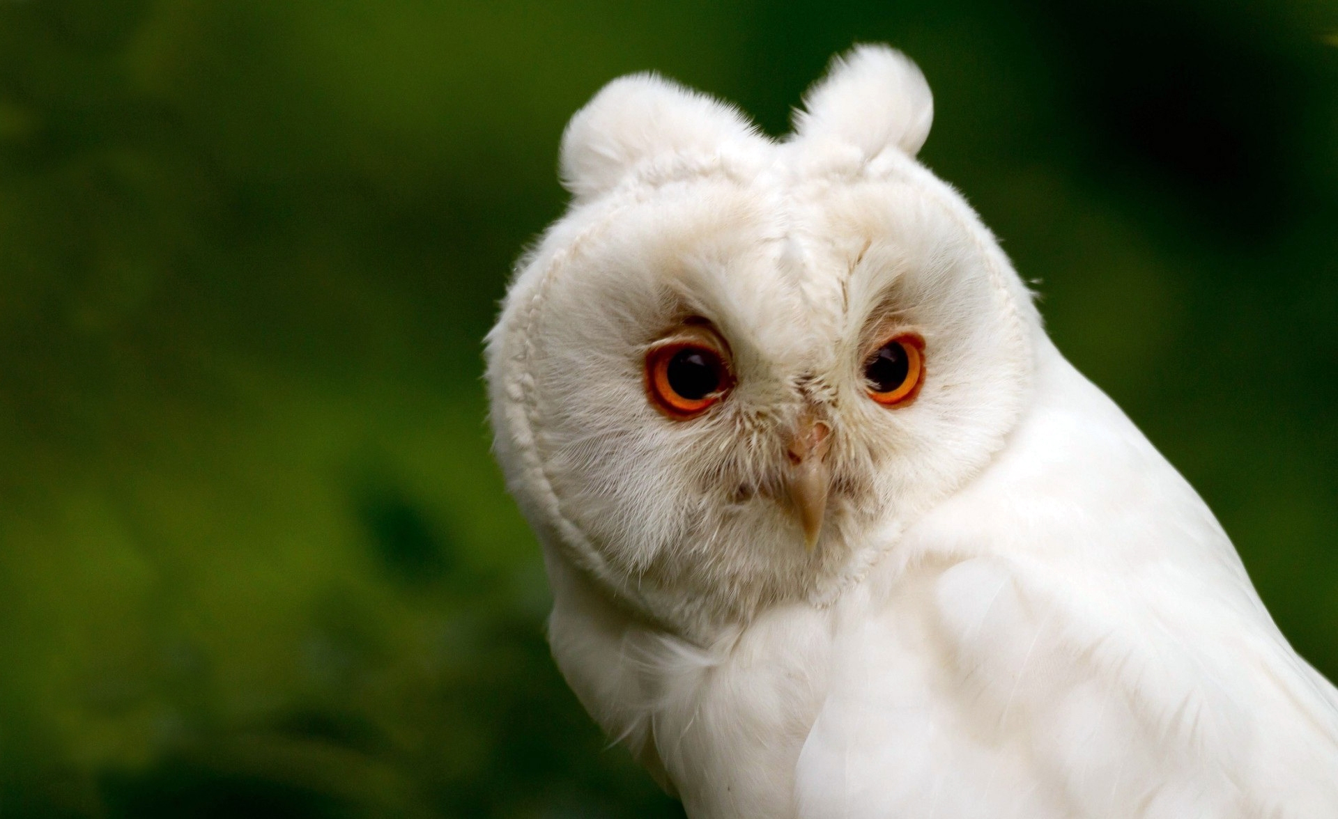 151522 download wallpaper Animals, Background, Owl, Head, Beak, Eyes screensavers and pictures for free