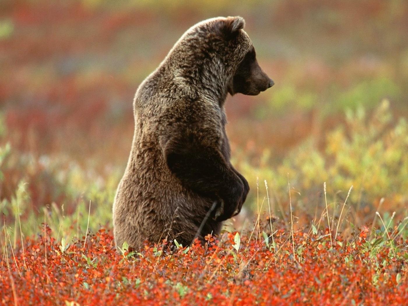 40449 Заставки и Обои Медведи на телефон. Скачать Медведи, Животные картинки бесплатно