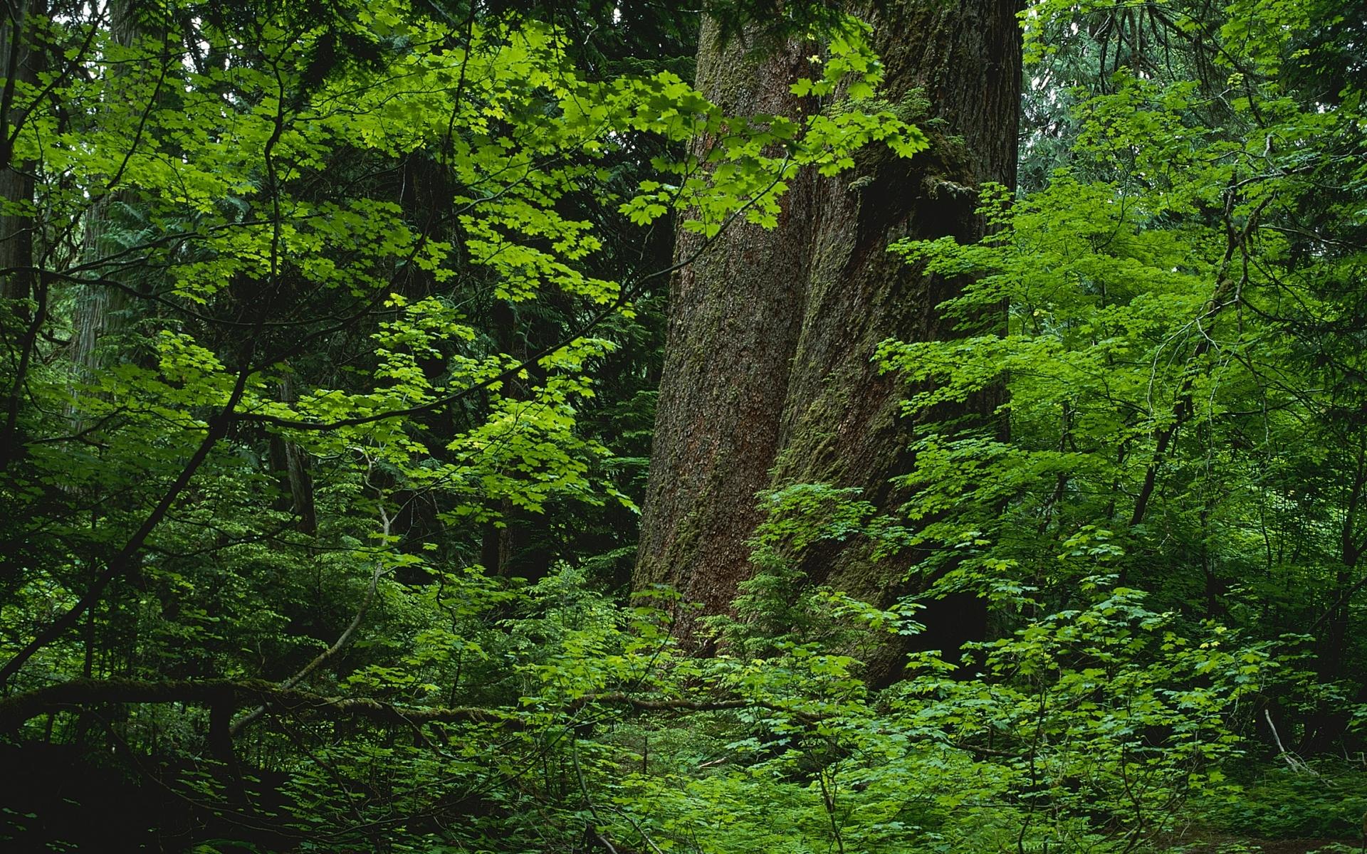 Скачать картинку Деревья, Пейзаж, Растения в телефон бесплатно.