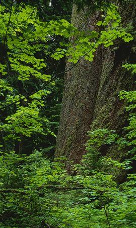 3744 скачать обои Растения, Пейзаж, Деревья - заставки и картинки бесплатно
