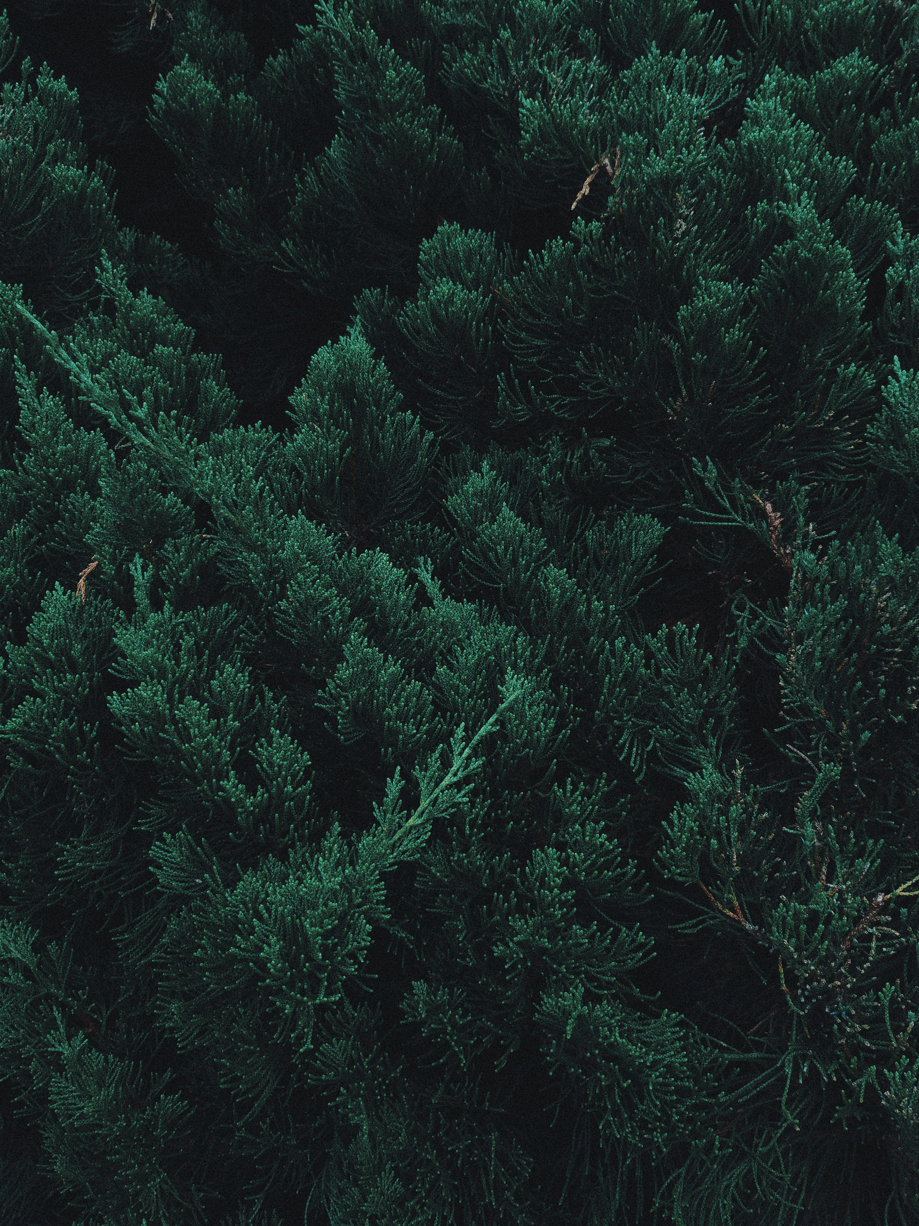 64640 обои 720x1520 на телефон бесплатно, скачать картинки Природа, Листья, Растение, Ветки, Зеленый 720x1520 на мобильный