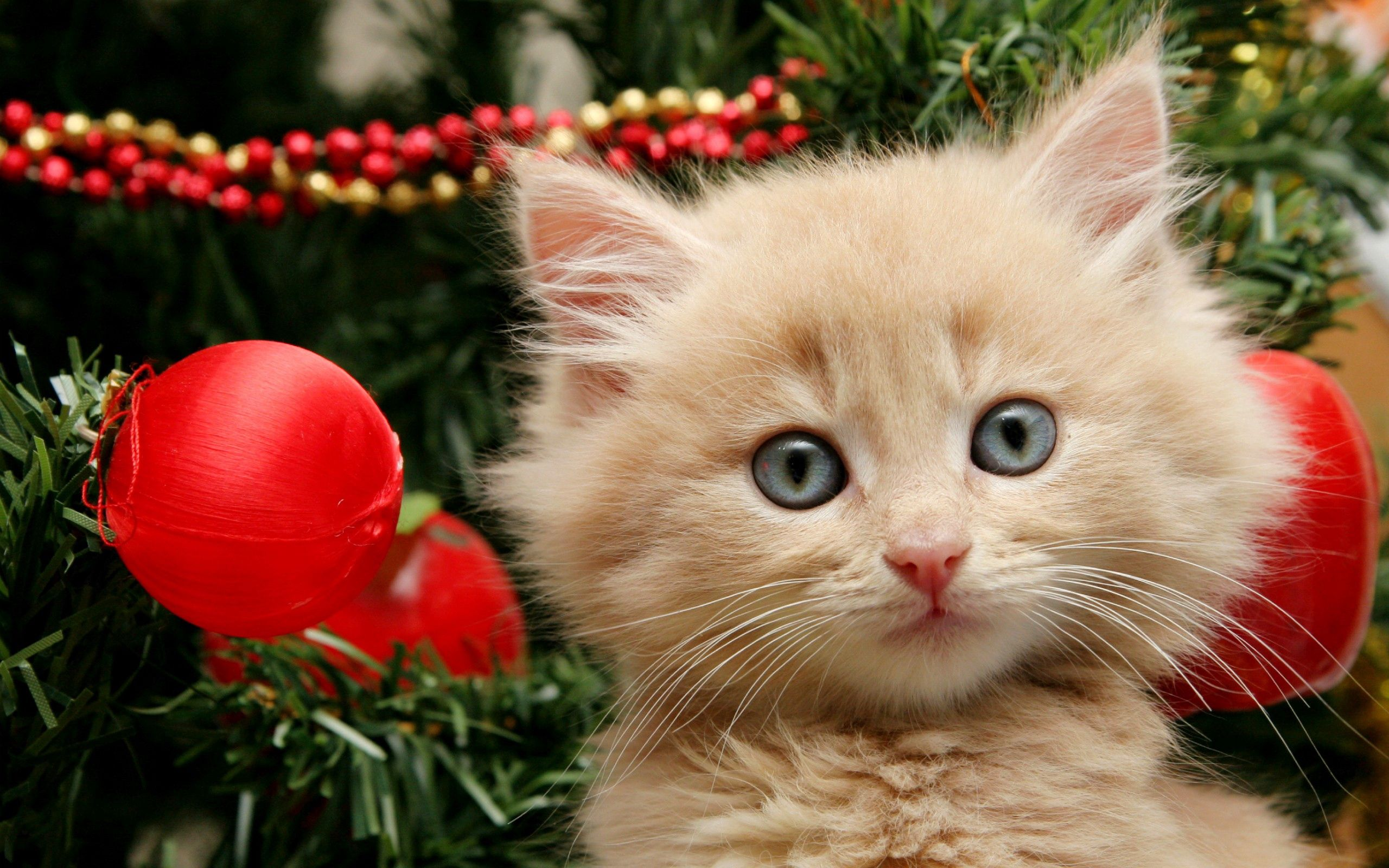 70639 Screensavers and Wallpapers Toys for phone. Download Animals, New Year, Toys, Fluffy, Kitty, Kitten pictures for free