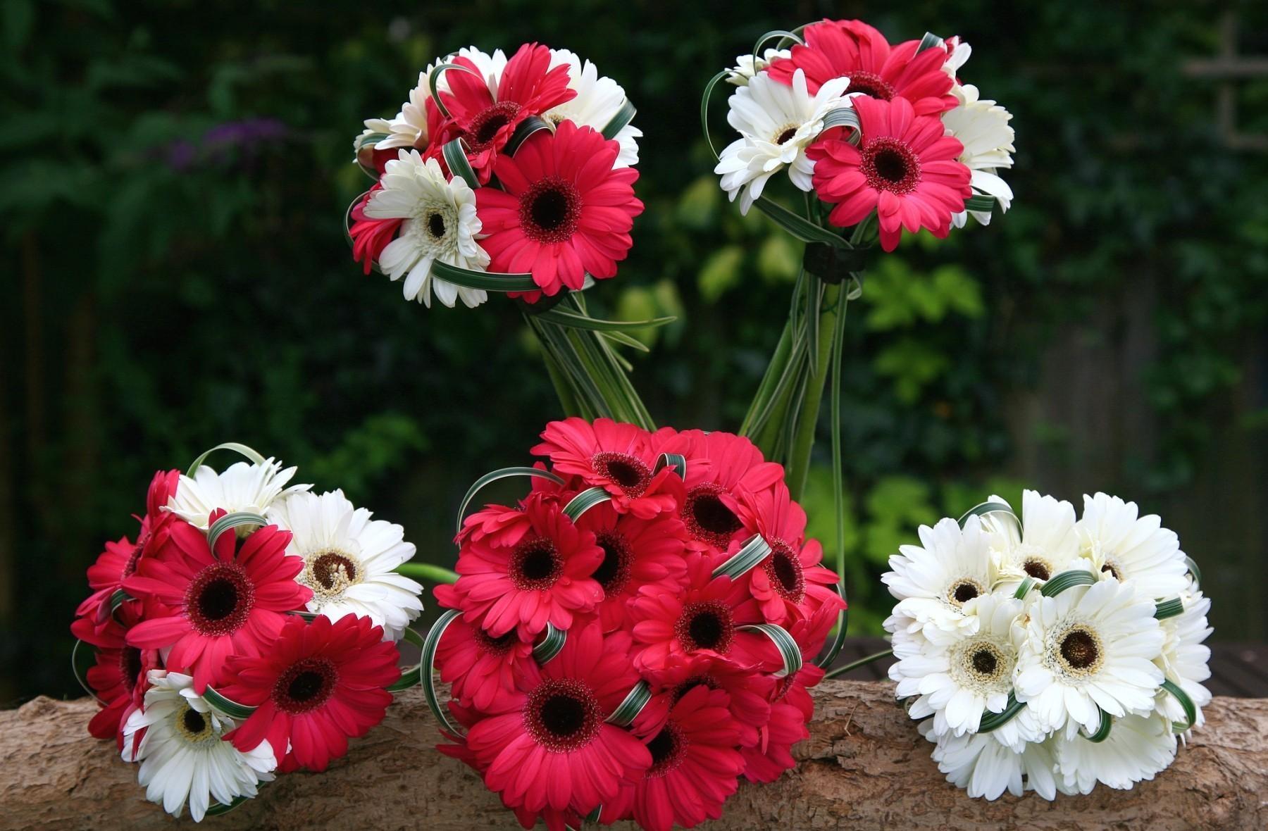 51749 télécharger le fond d'écran Fleurs, Bouquets, Combinaison, Gerberas - économiseurs d'écran et images gratuitement