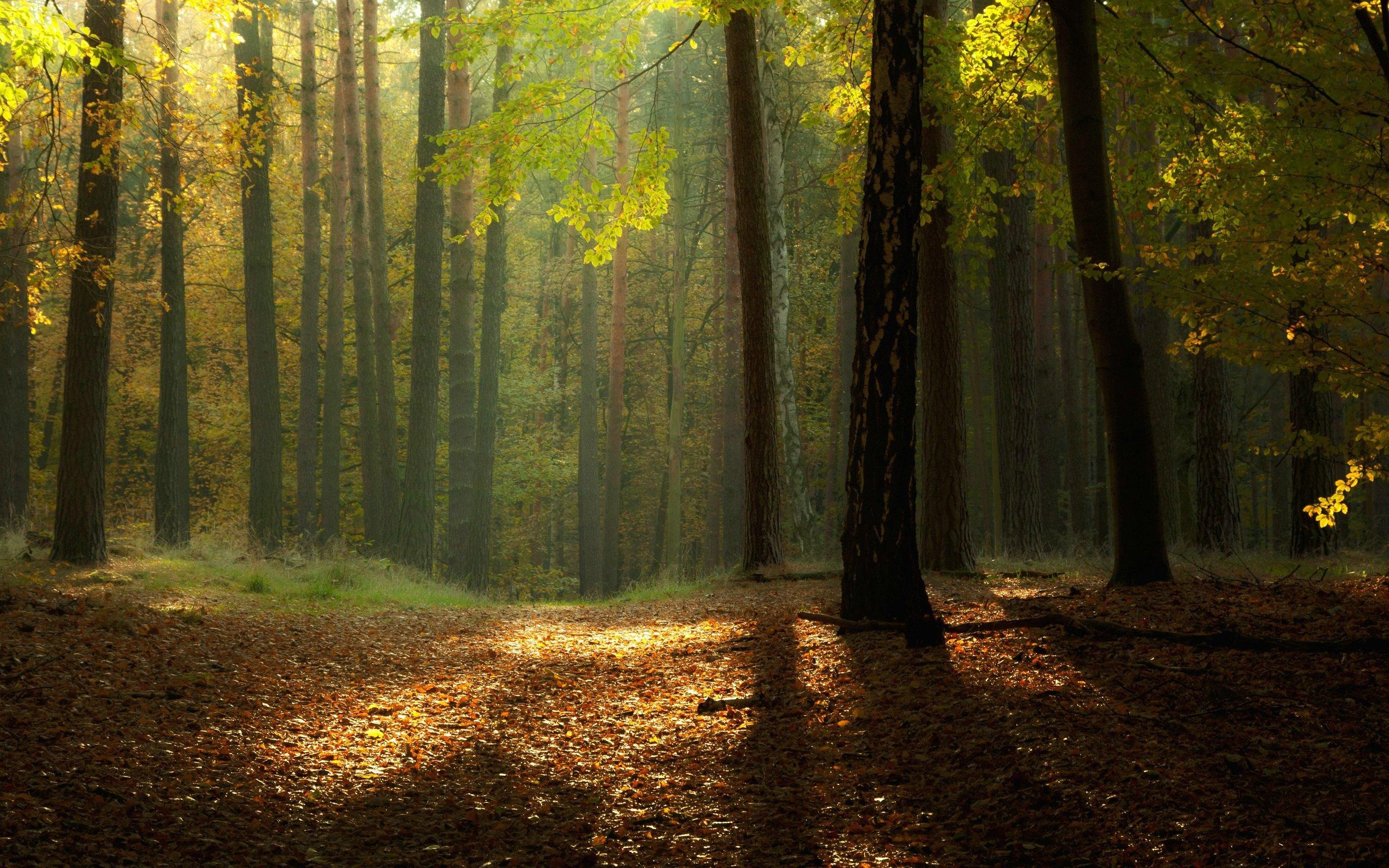 19248 скачать обои Пейзаж, Деревья, Осень - заставки и картинки бесплатно