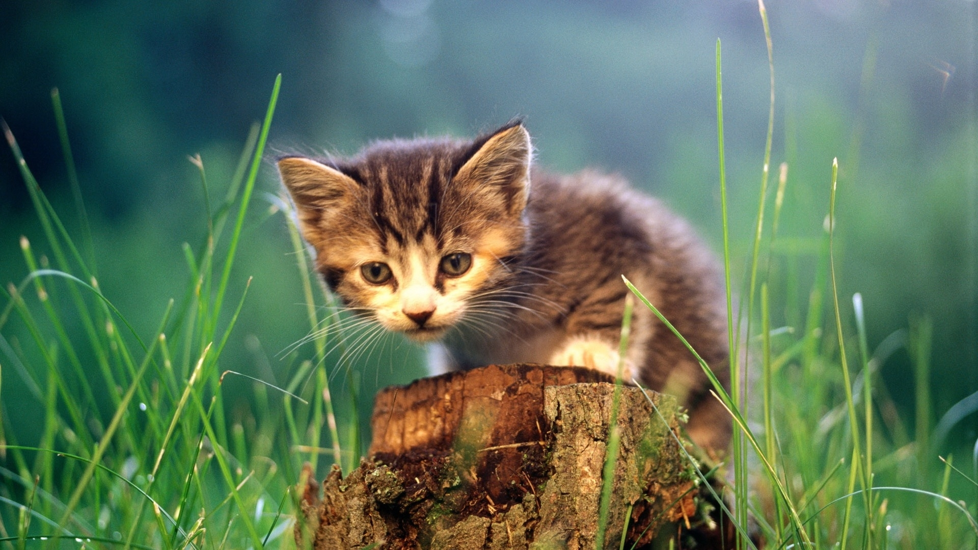 49567 download wallpaper Animals, Cats screensavers and pictures for free