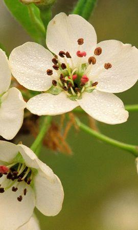 2578 descargar fondo de pantalla Plantas, Flores: protectores de pantalla e imágenes gratis